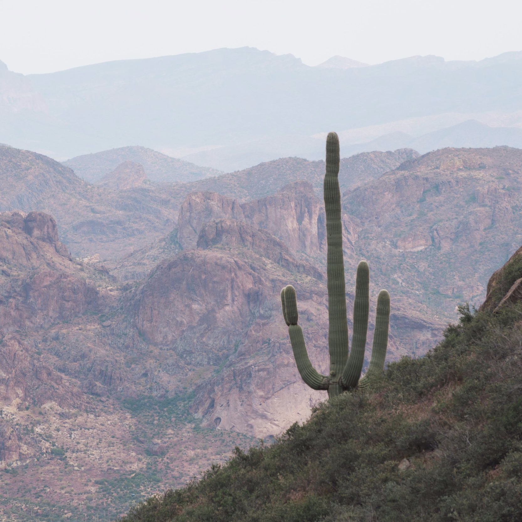 Saguaro in the Superstition Mountains Wilderness