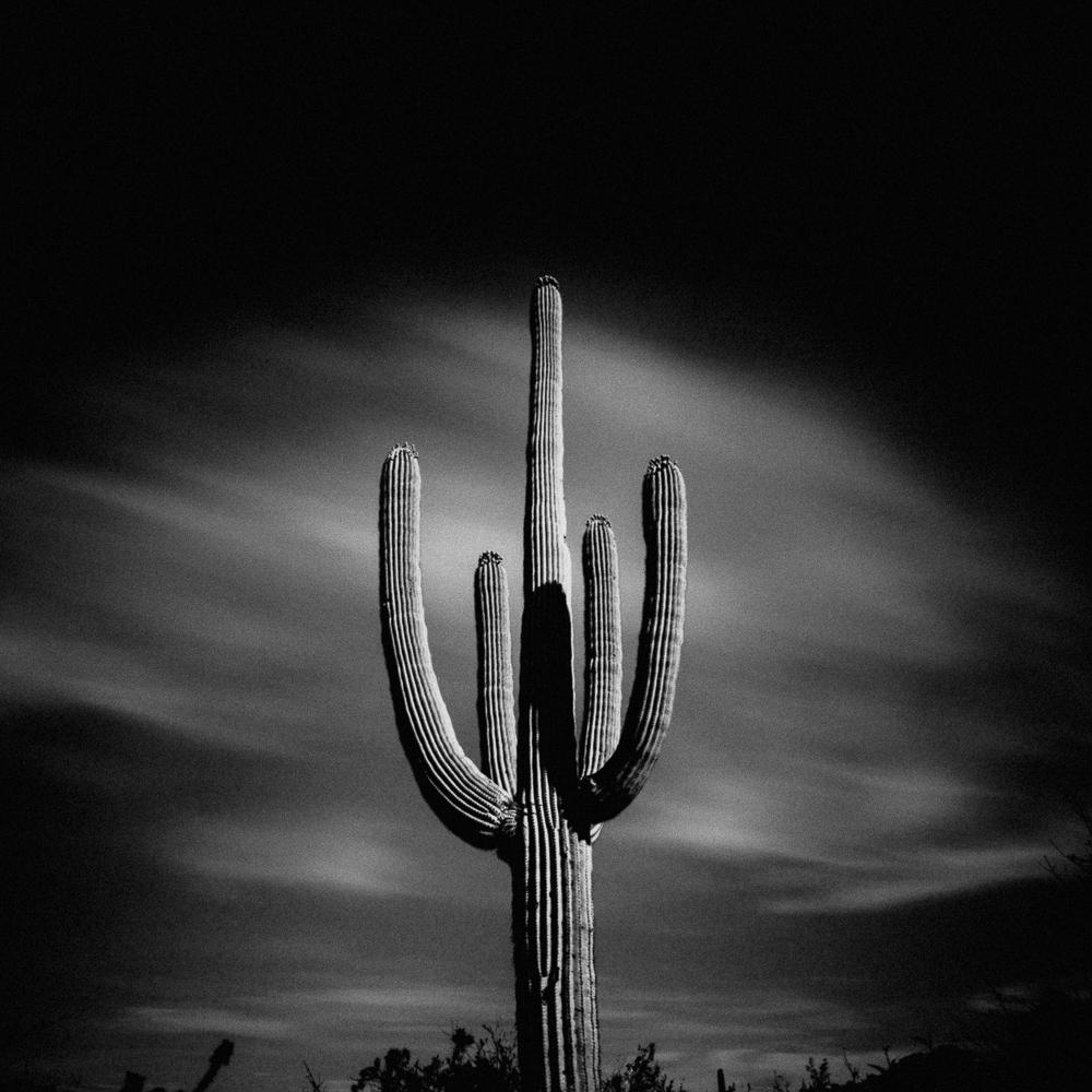 Saguaro National Park, Arizona, April 2019