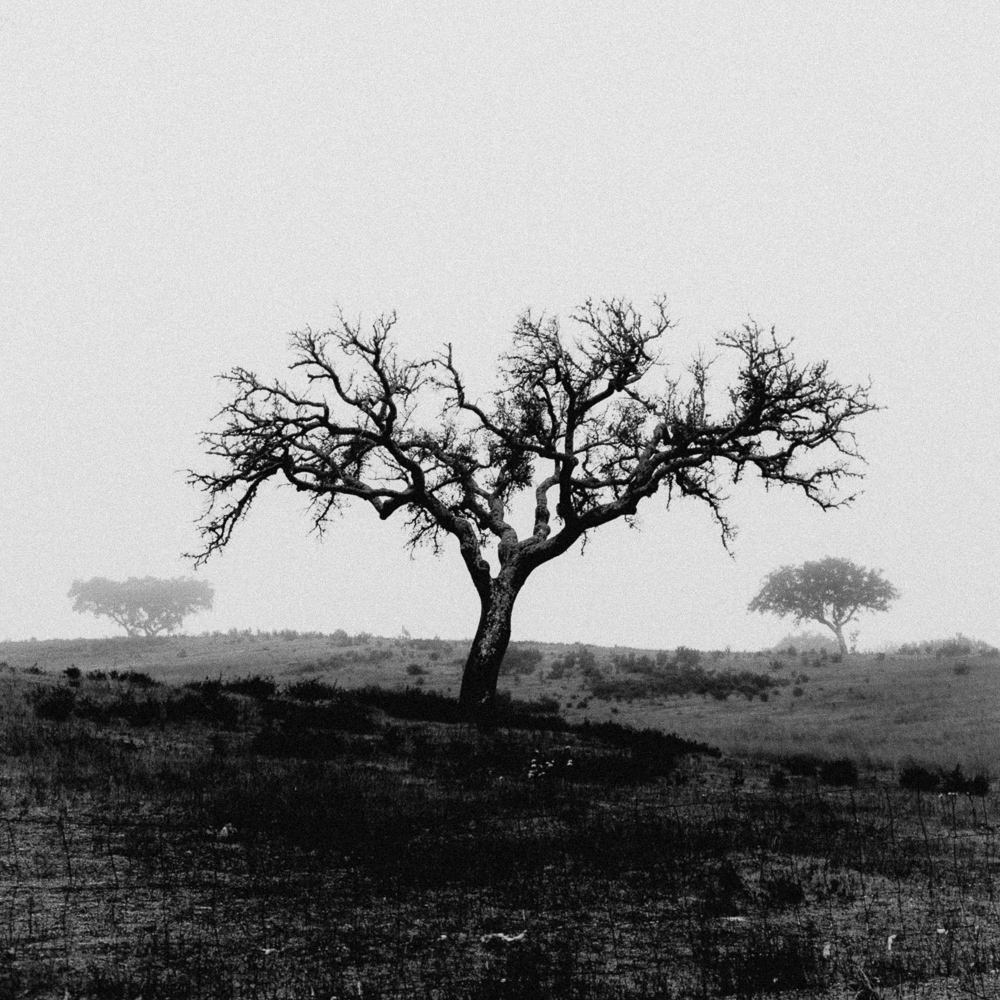 Trees, Alentejo, December 2018