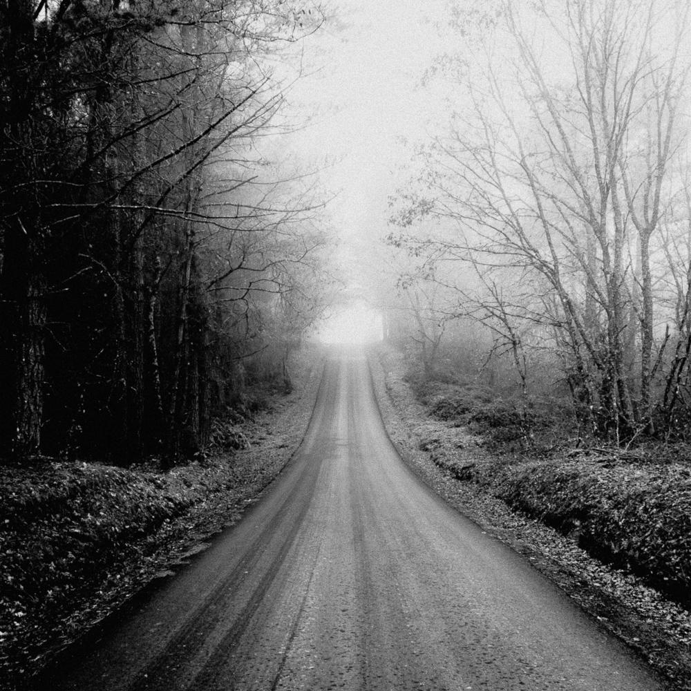 Foggy road, January 2019