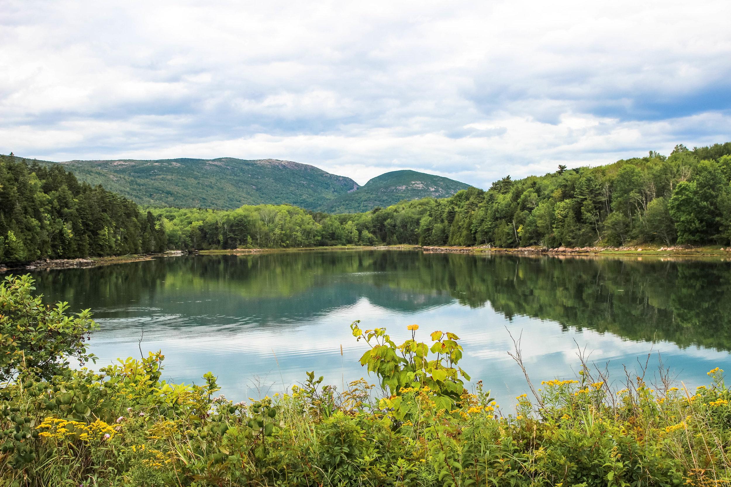 Green Acadia.jpg