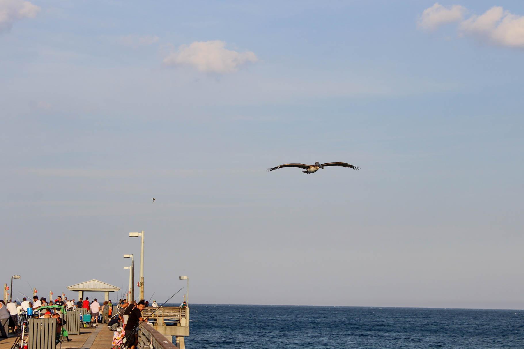 Dania Beach Photos-3.jpg