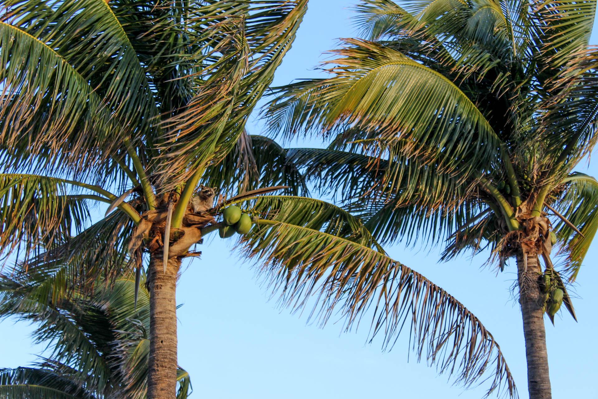 Dania Beach Photos-5.jpg