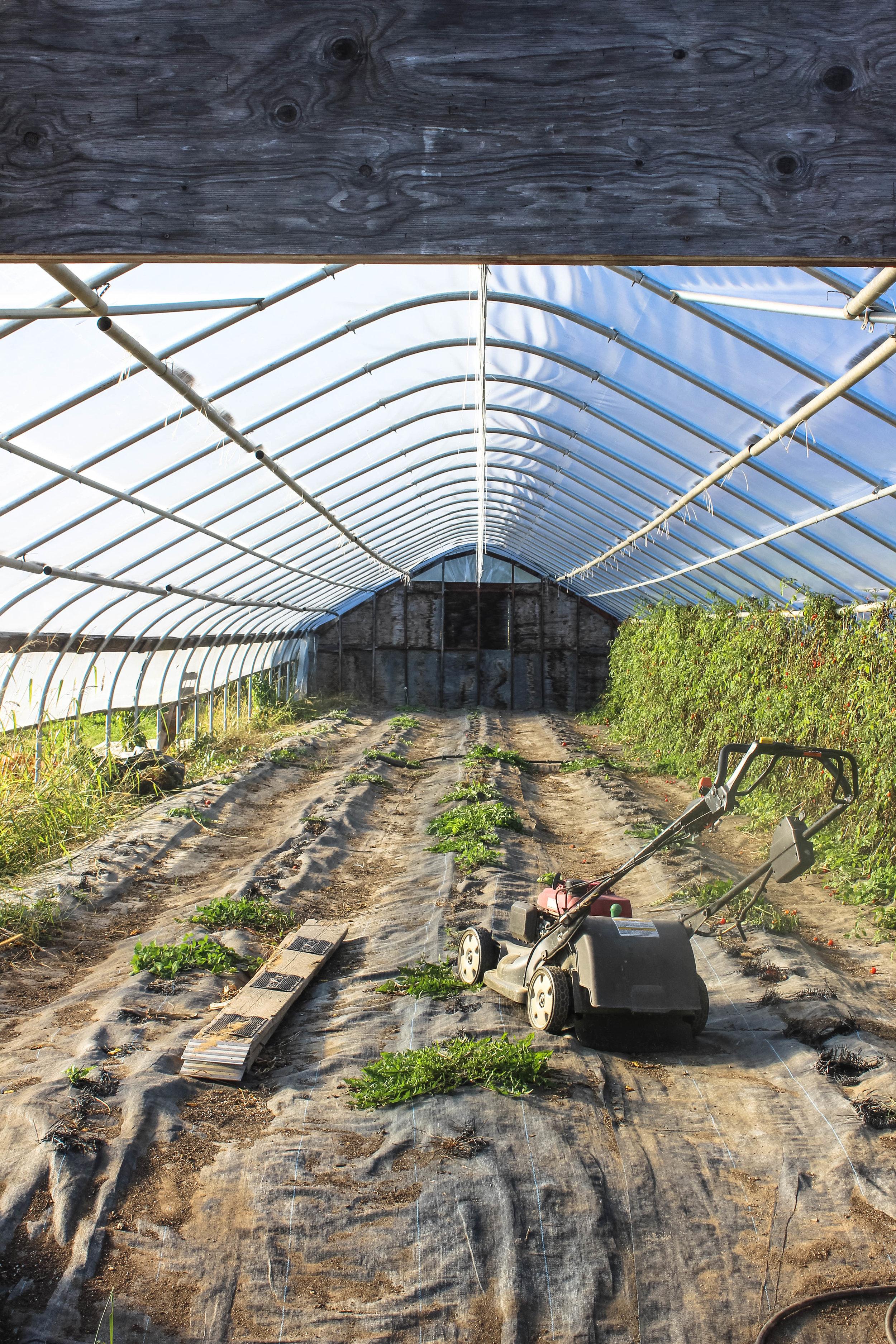 Emery Farm NH-7.jpg