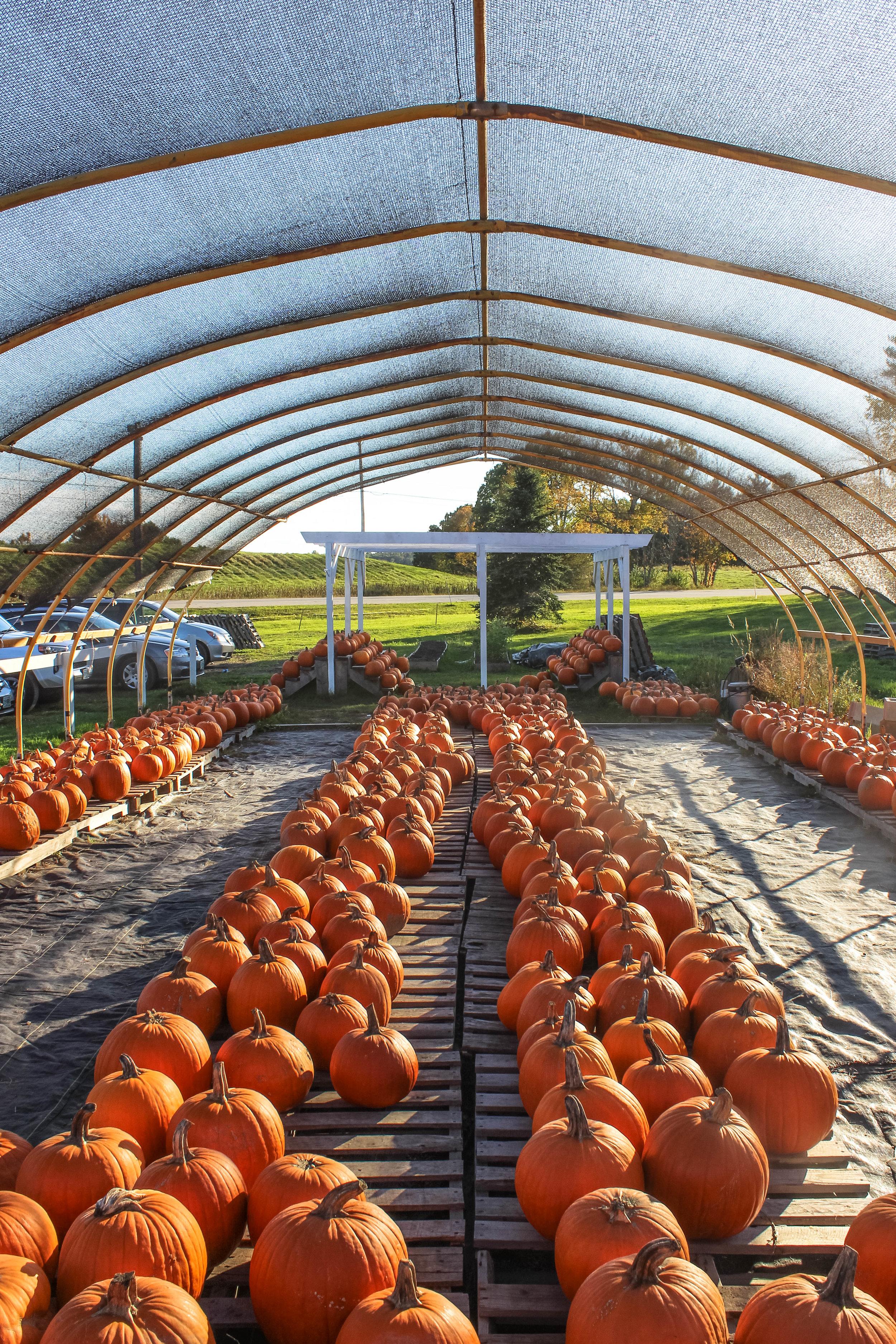 Emery Farm NH-11.jpg