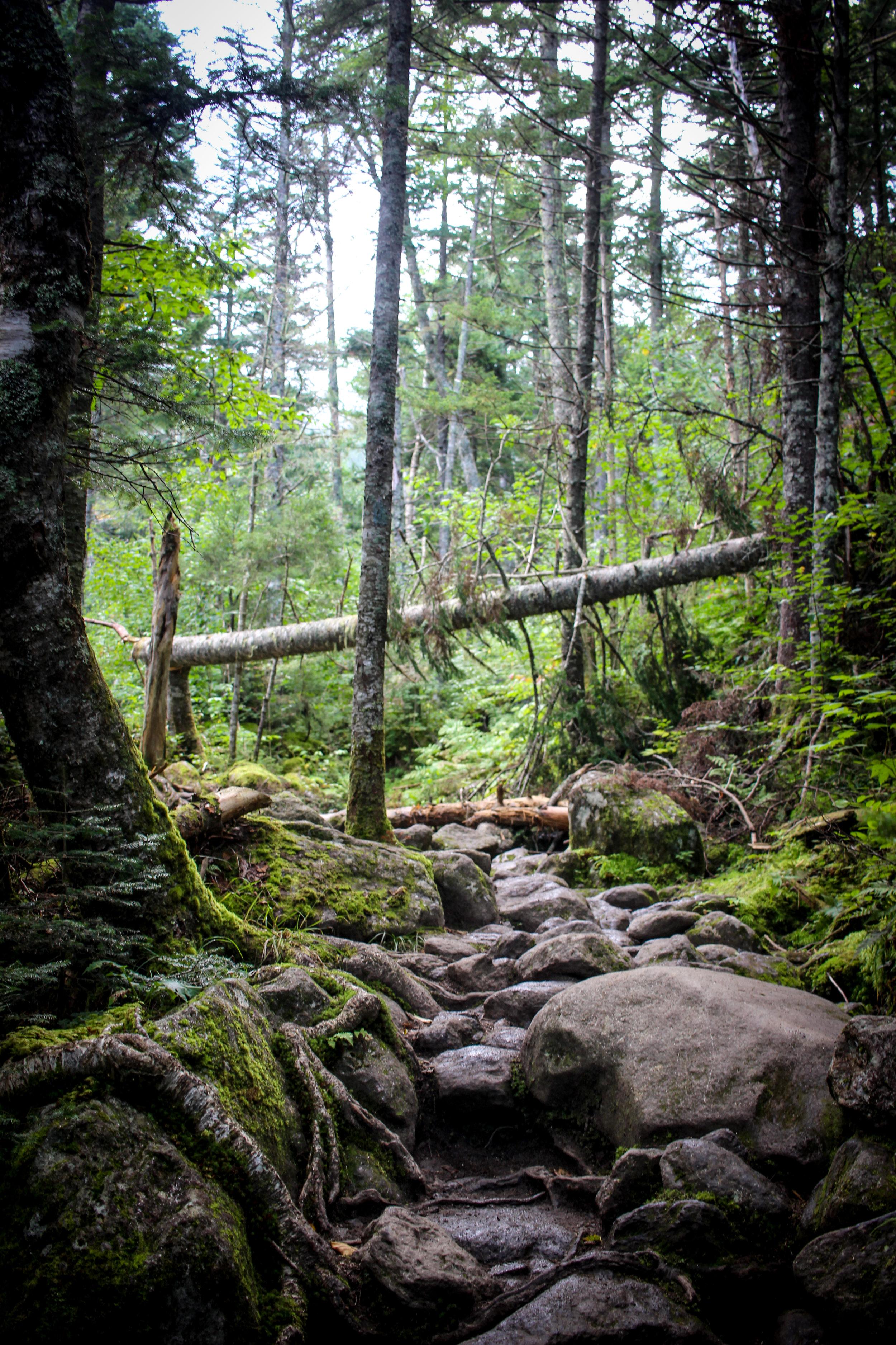 Mount Washington TWG_-12.jpg