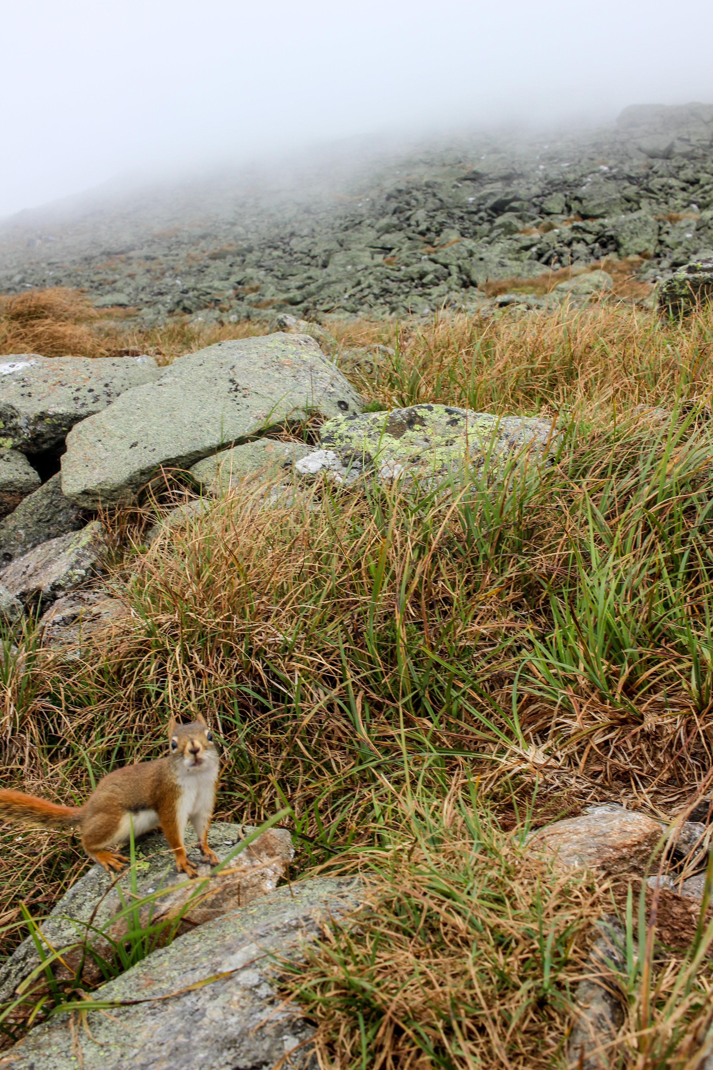 Mount Washington TWG_-138.jpg