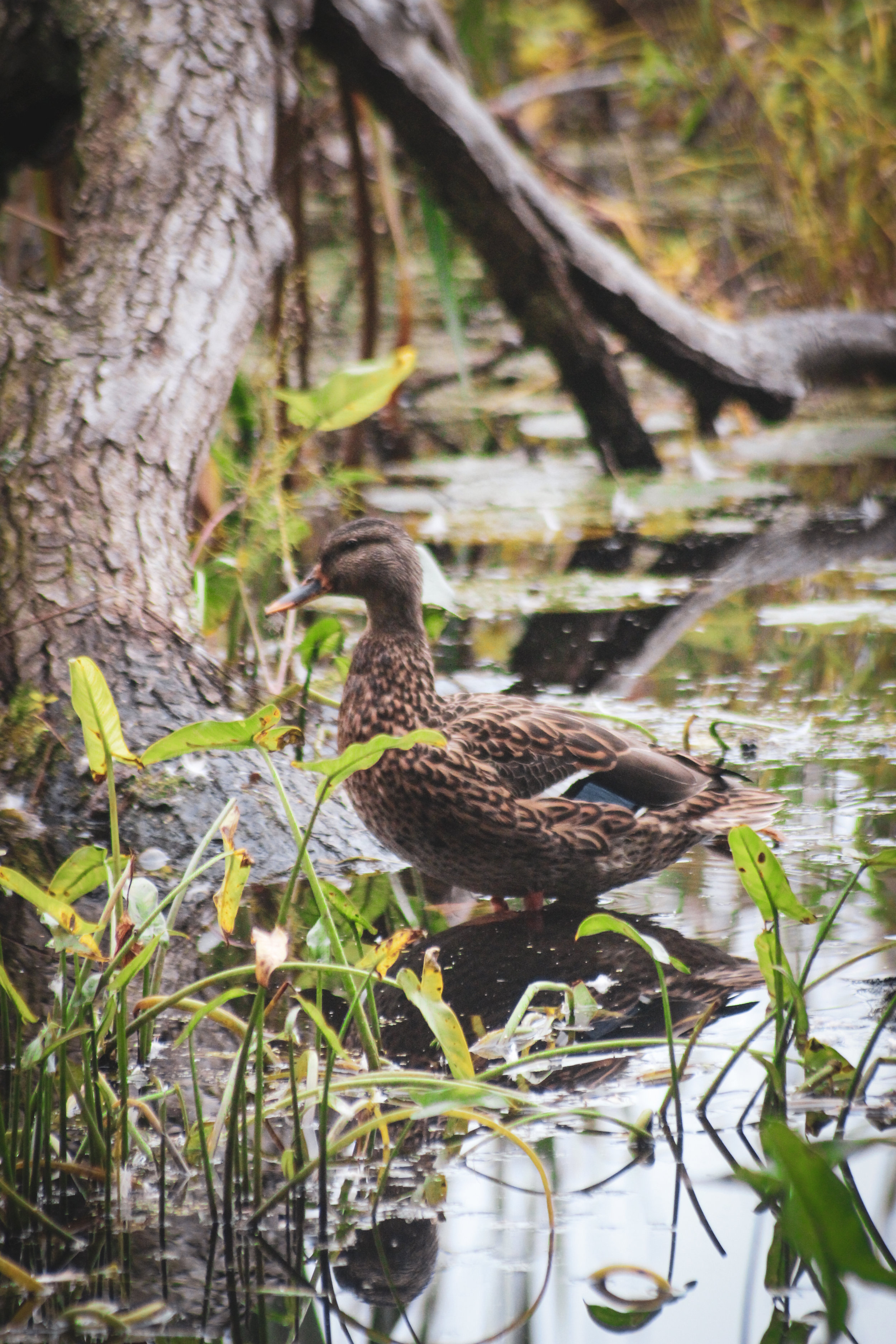 Broadmoor Wildlife Sanctuary TWG-6.jpg