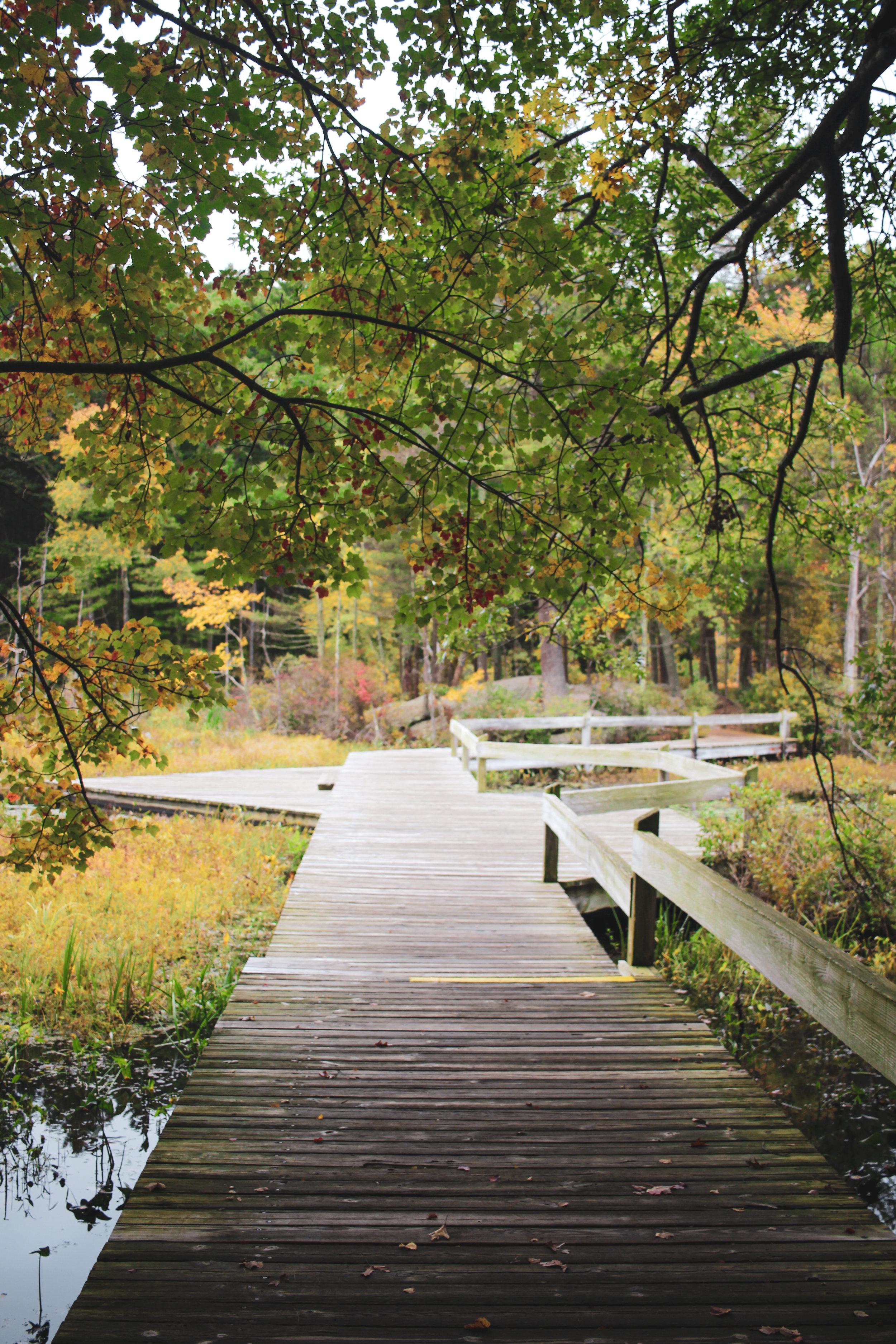 Broadmoor Wildlife Sanctuary TWG-9.jpg