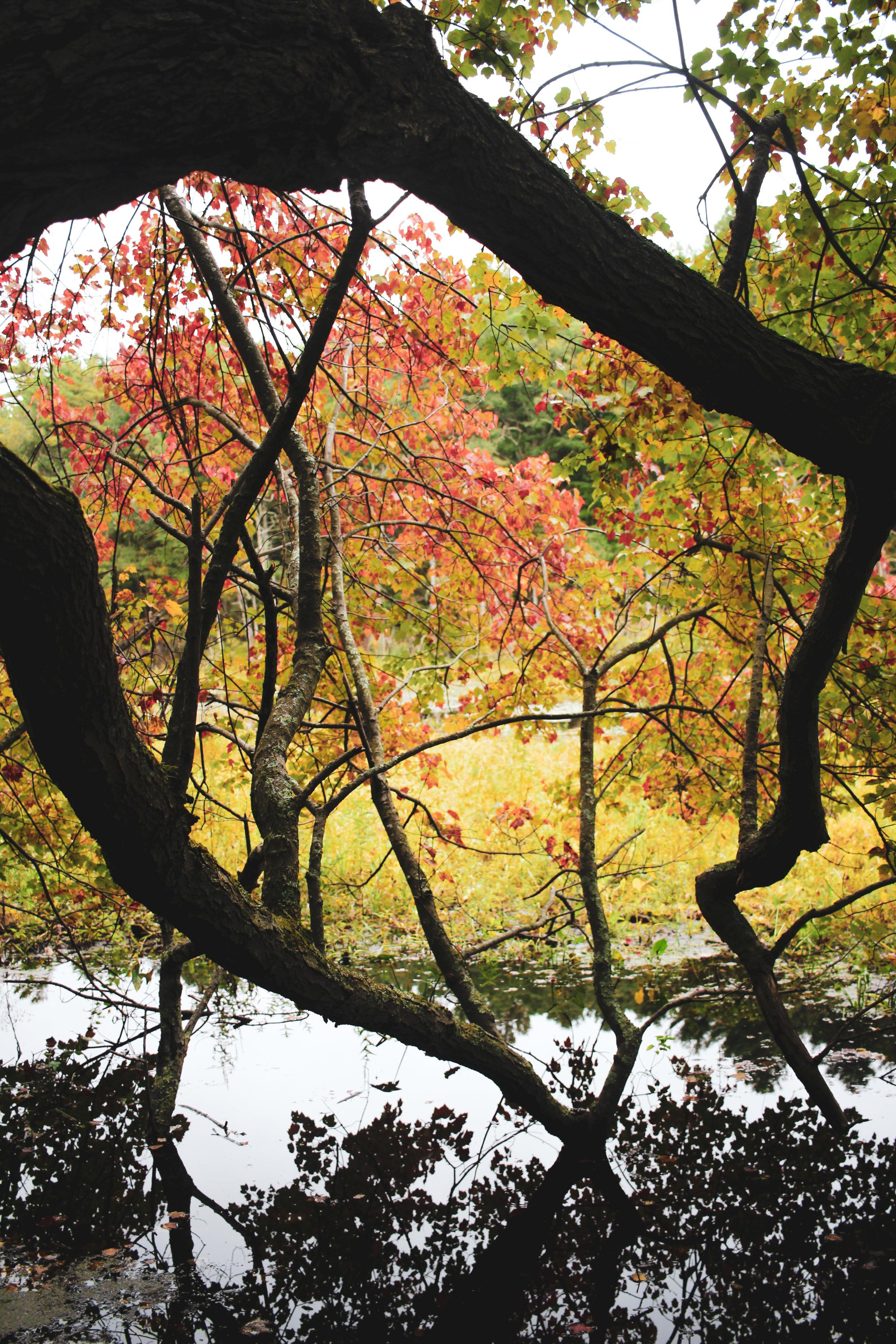 Broadmoor Wildlife Sanctuary TWG-33.jpg