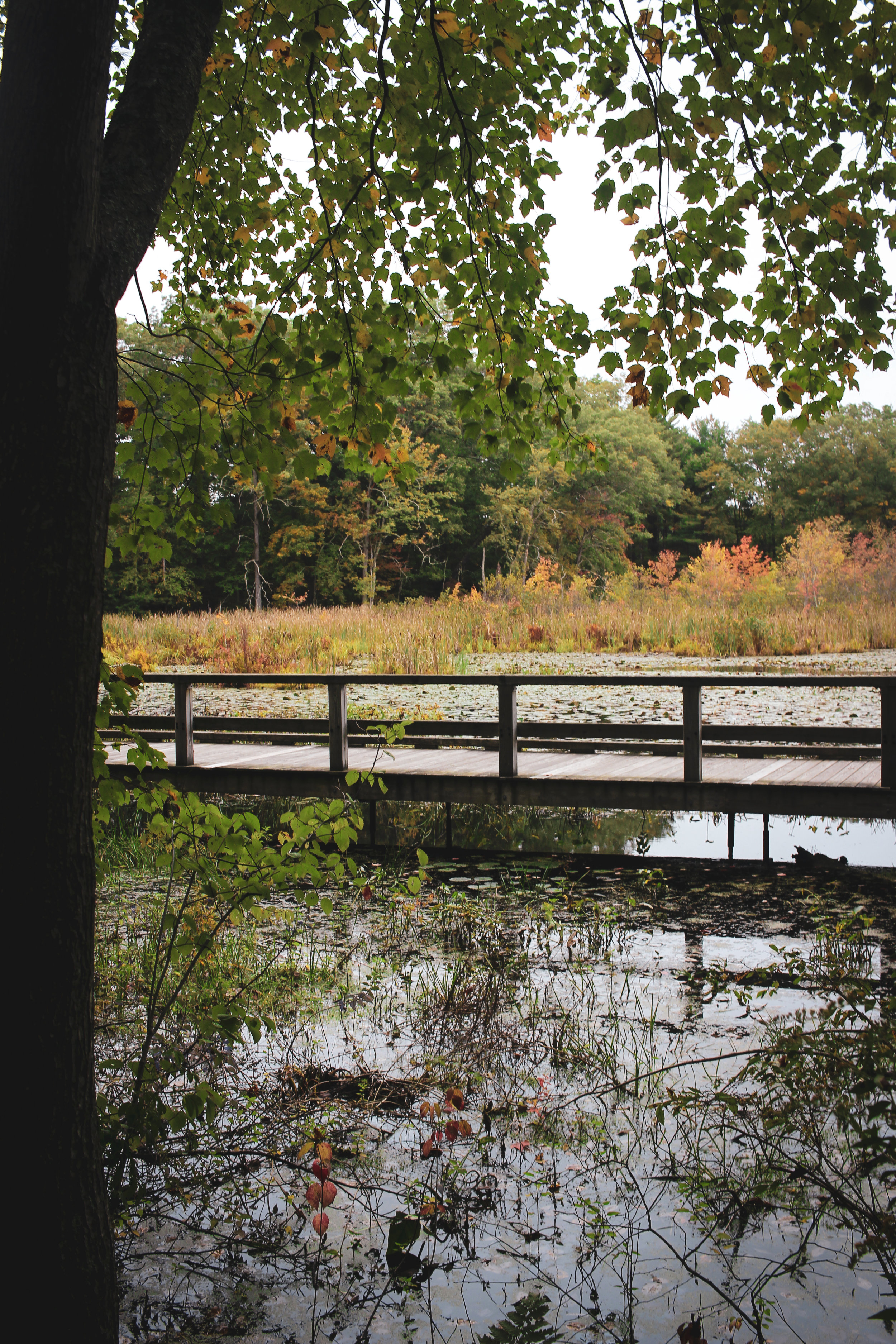 Broadmoor Wildlife Sanctuary TWG-34.jpg