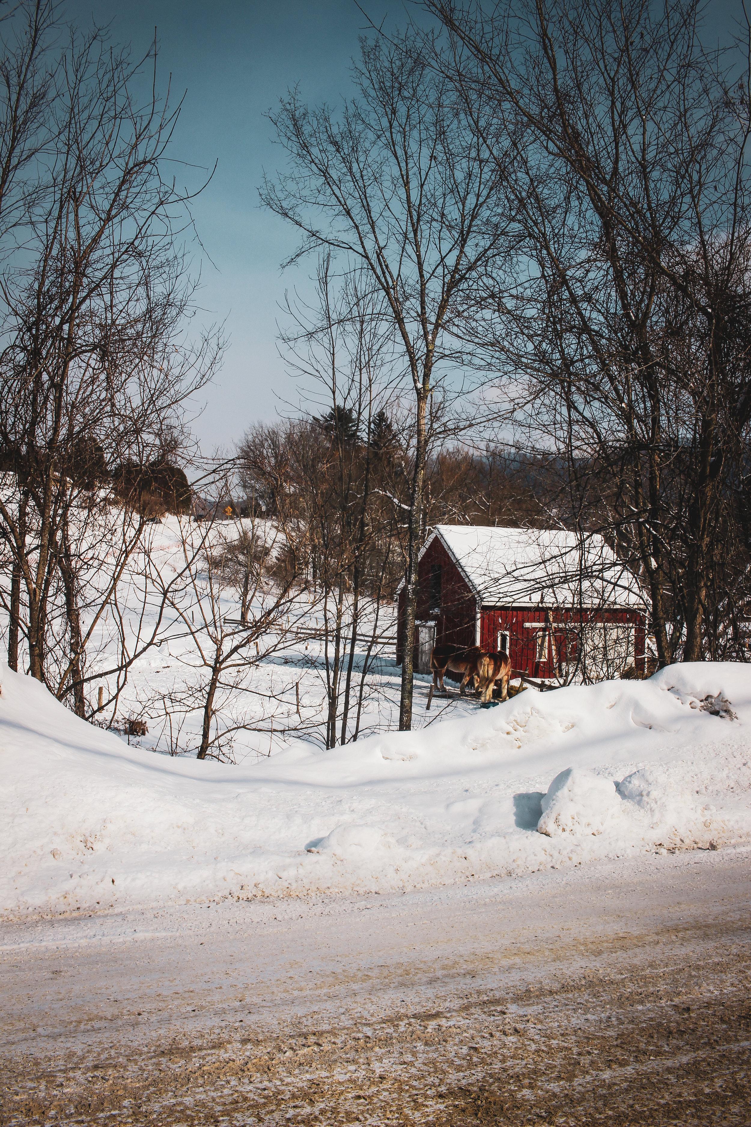 Vermont IG Stories_-55.jpg