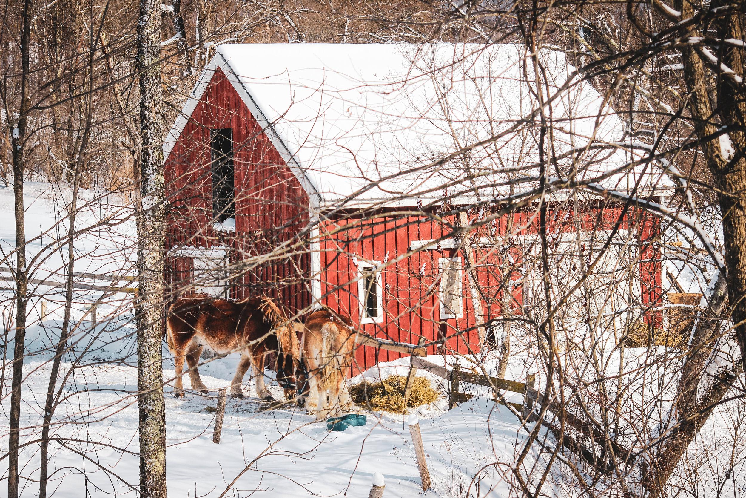 Vermont IG Stories_-61.jpg