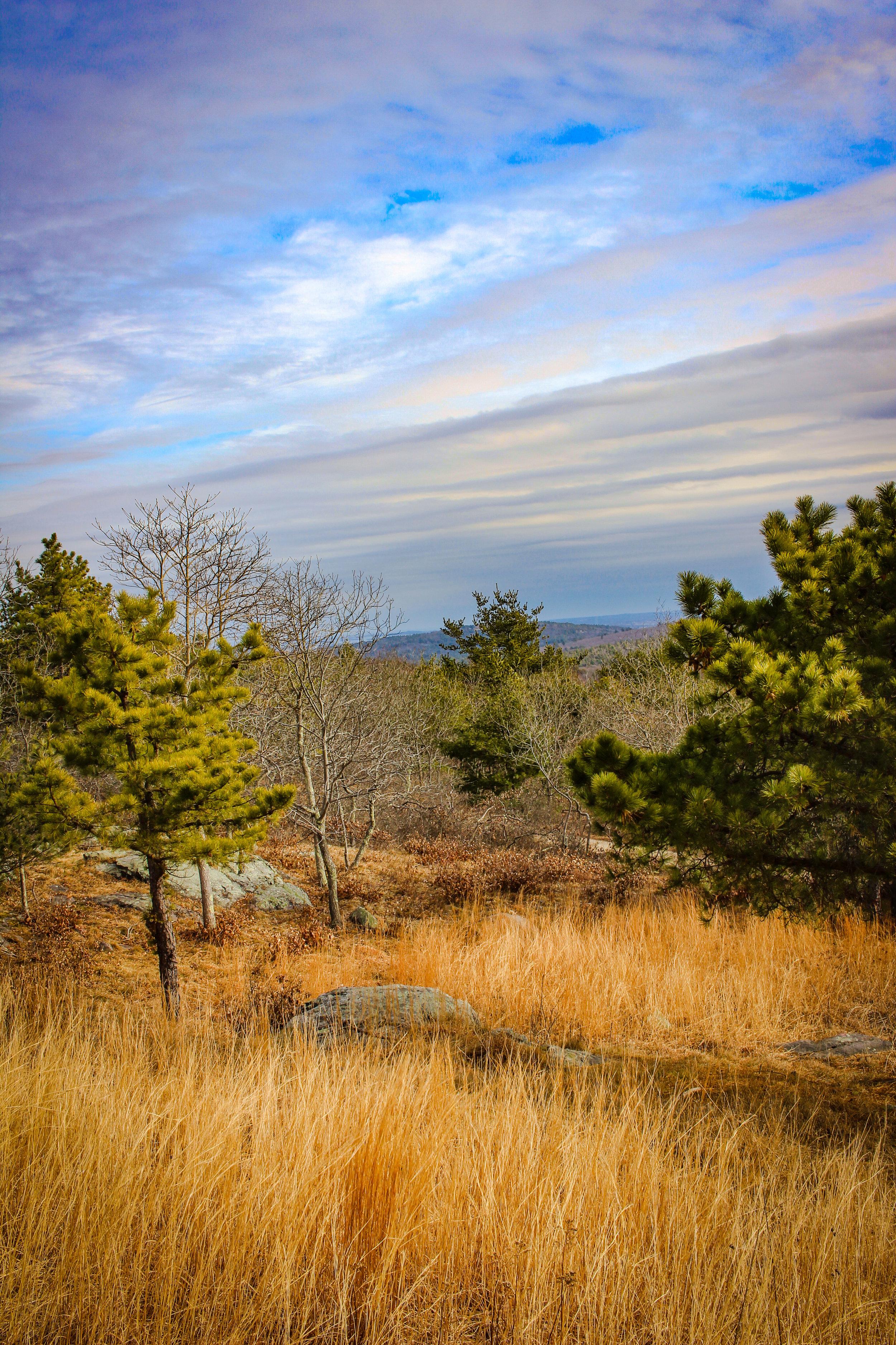 Blue Hills 2019 TWG-16.jpg