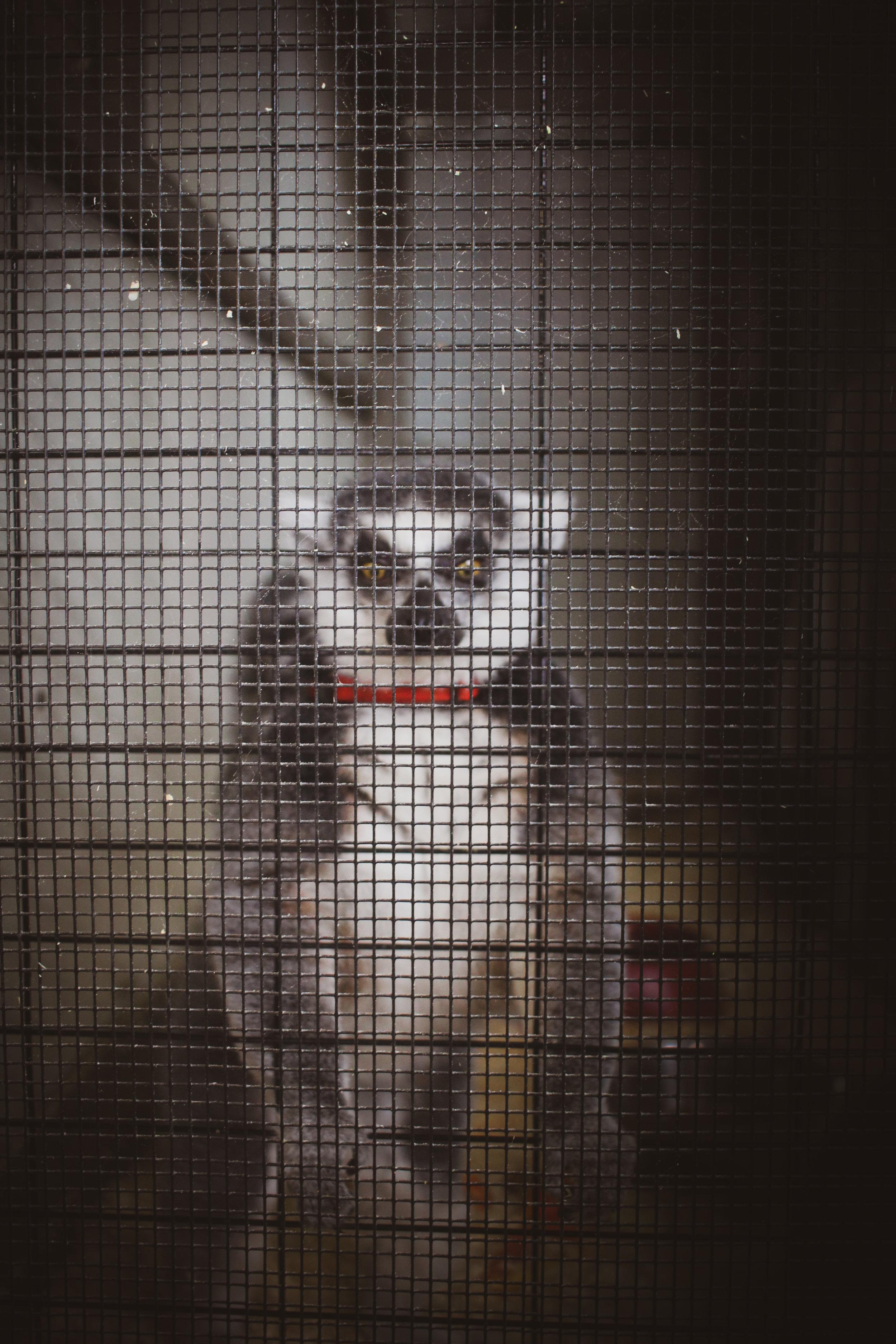 Animal Adventures - August 2019_-4.jpg