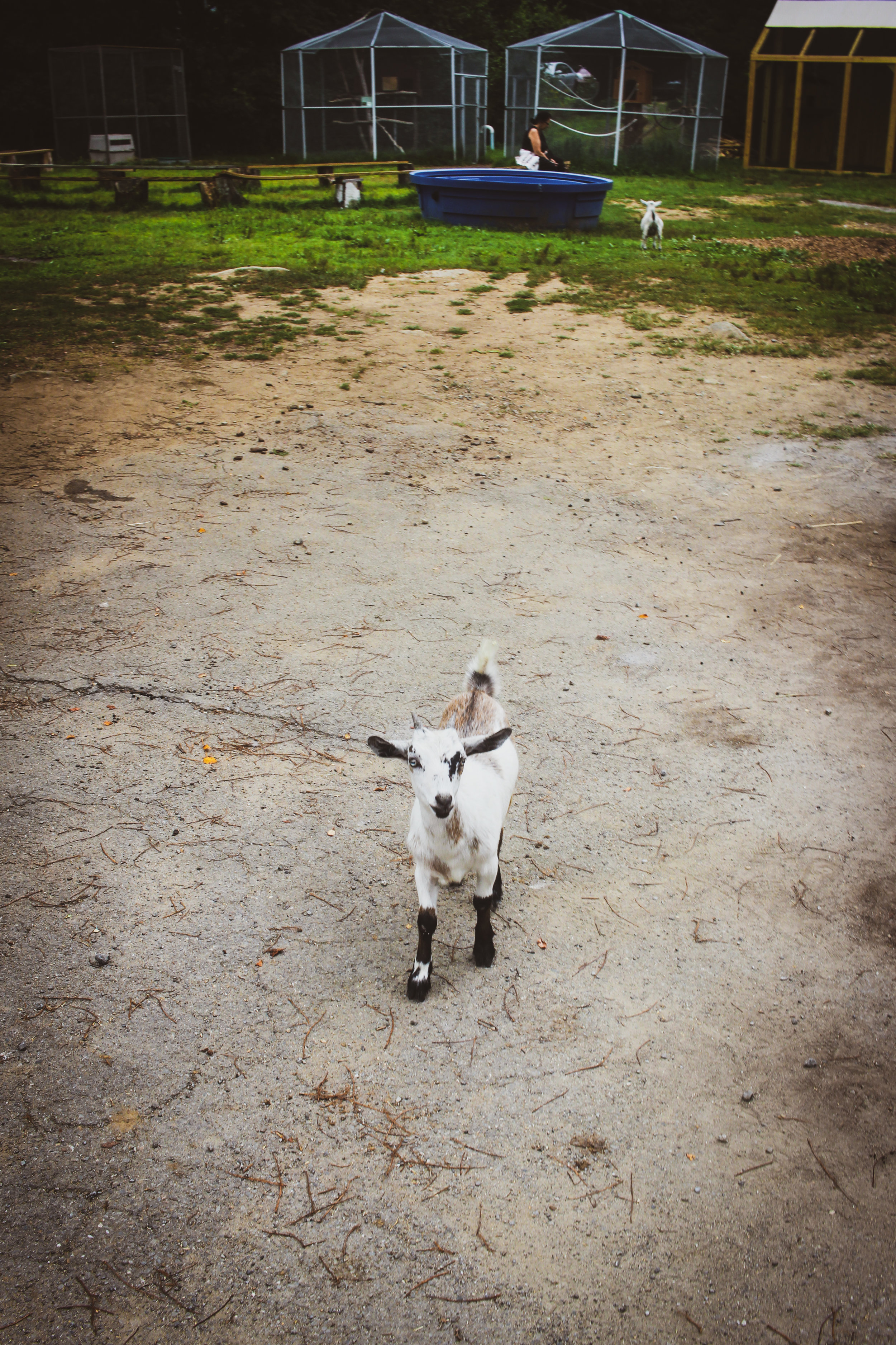 Animal Adventures - August 2019_-9.jpg