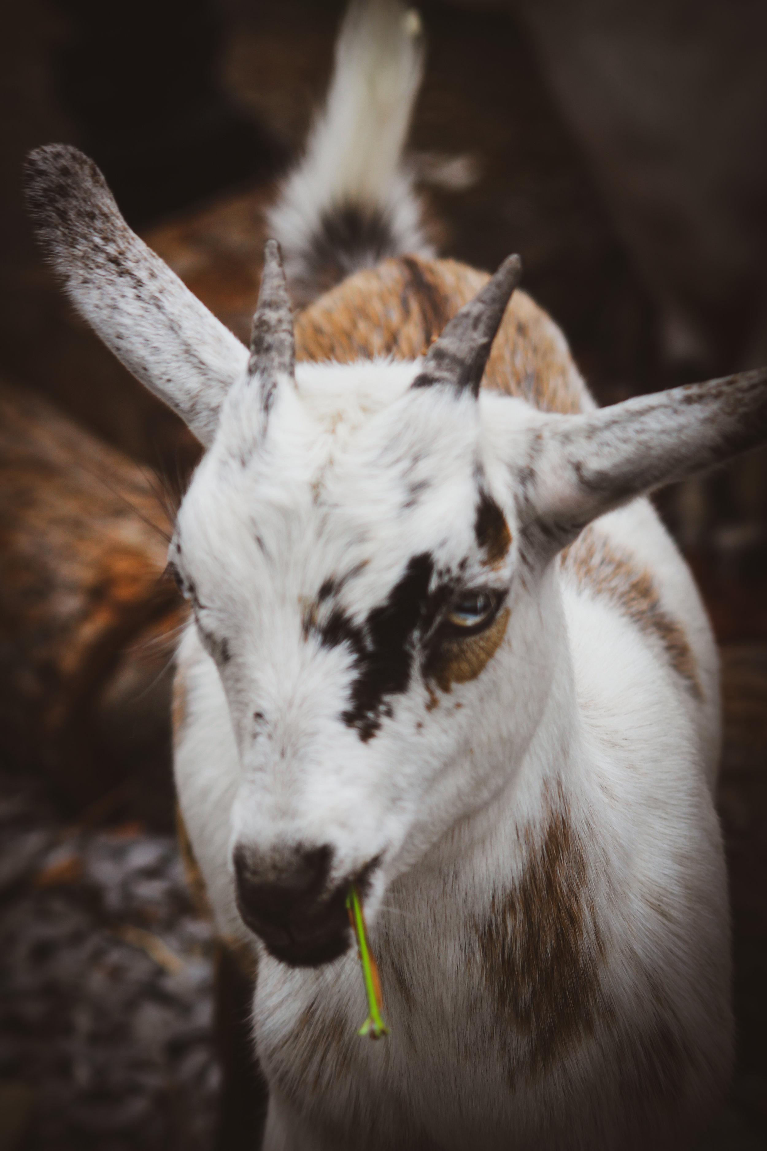 Animal Adventures - August 2019_-25.jpg