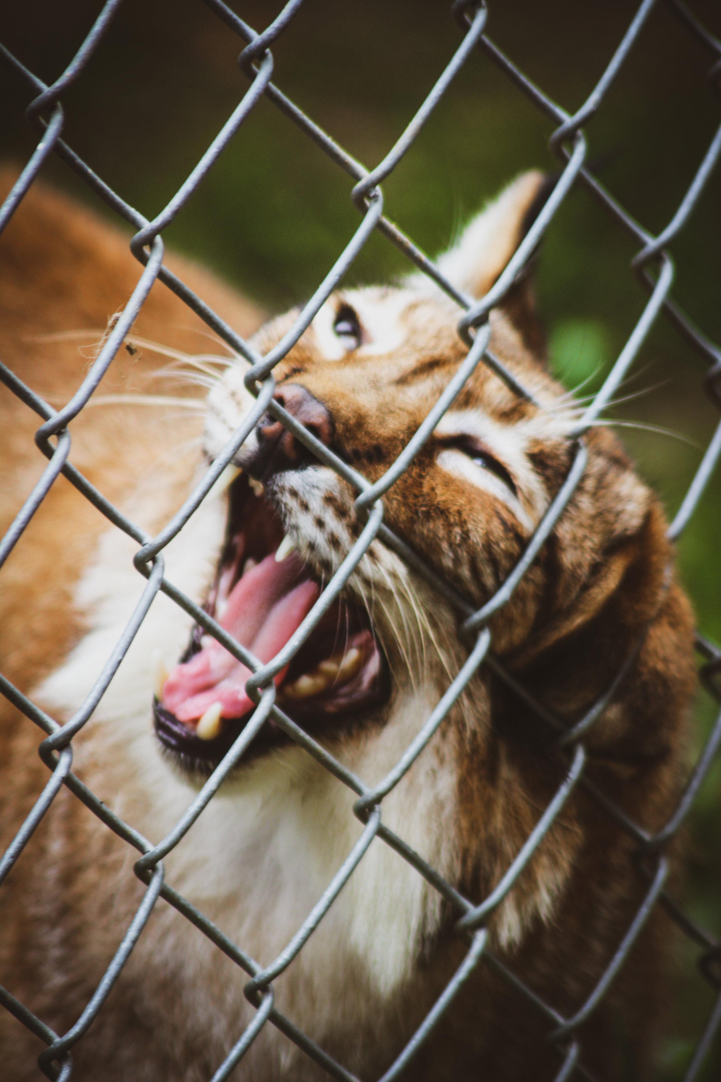 Animal Adventures - August 2019_-31.jpg