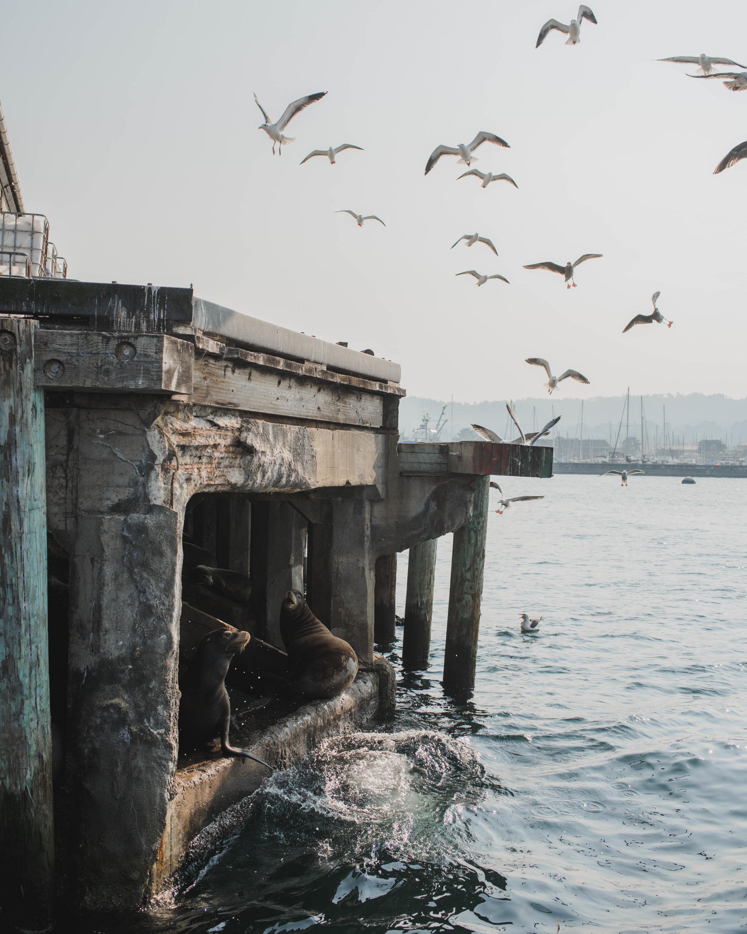 Monterey3.jpg