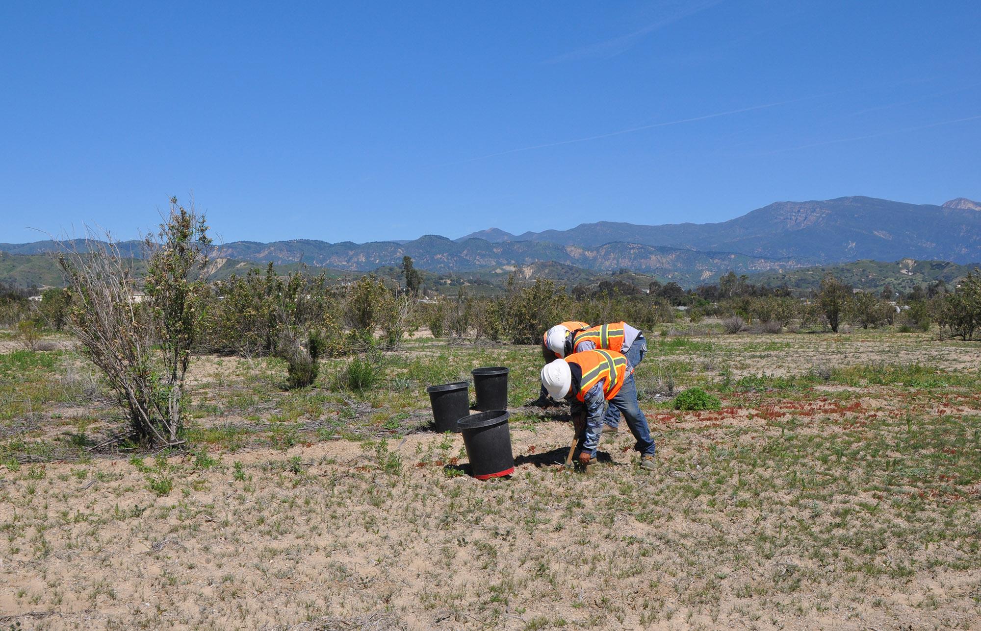 Nature Conservancy-planting.jpg