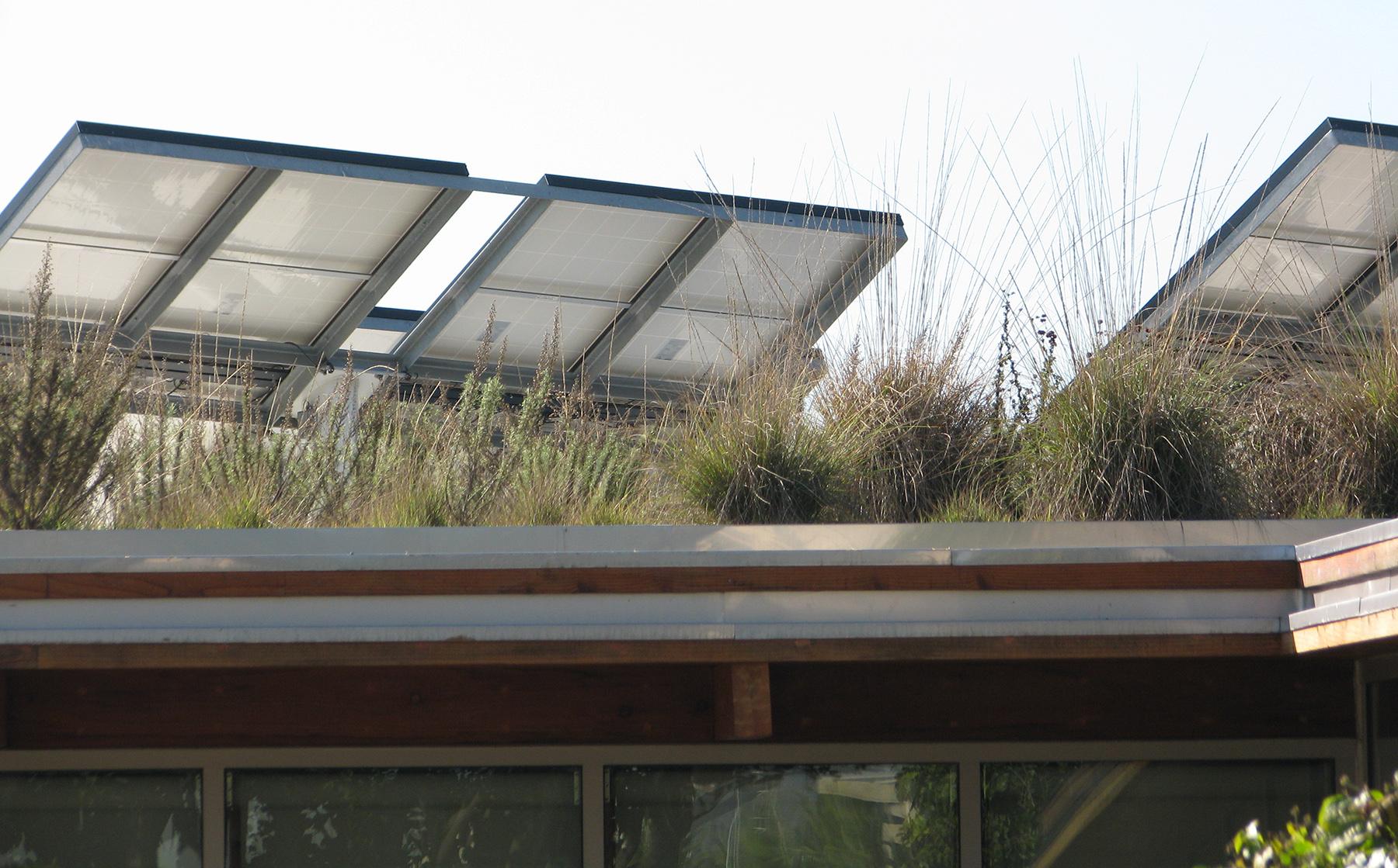 AOP-green roof zoom.jpg