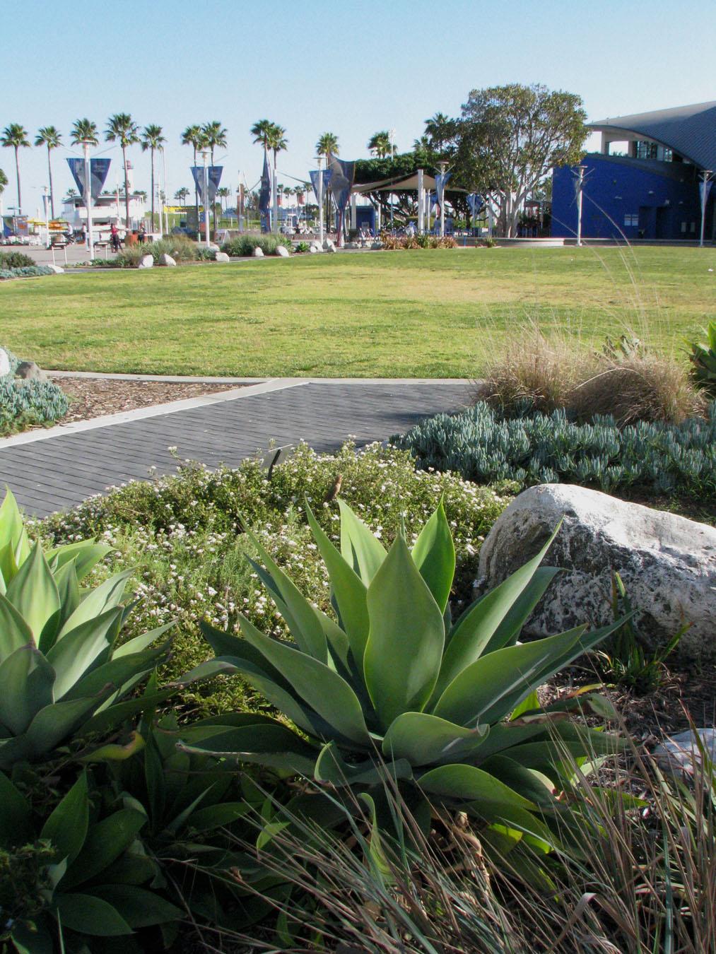 AOP-entry-succulents.jpg