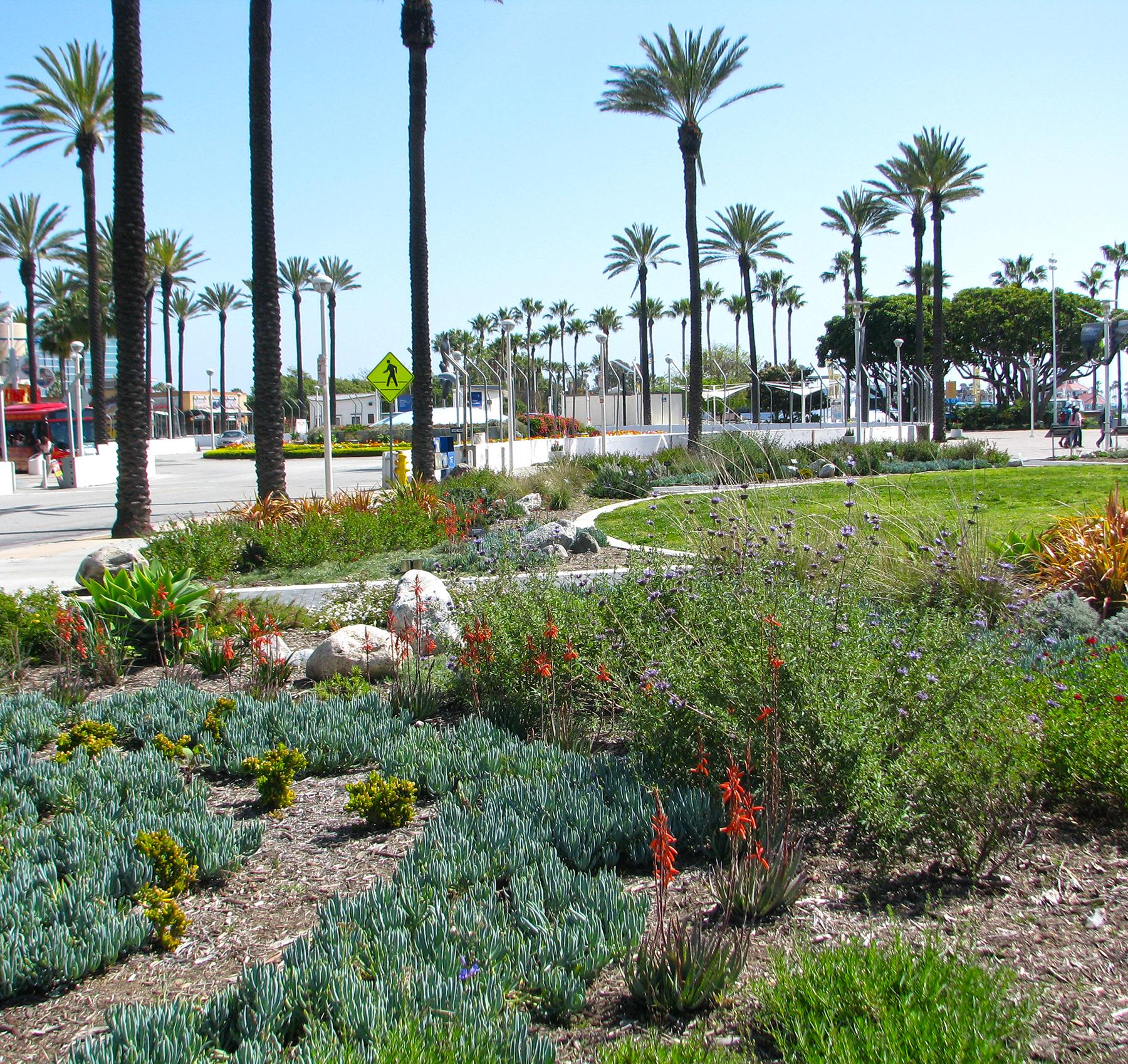 AOp-garden plants 2.jpg