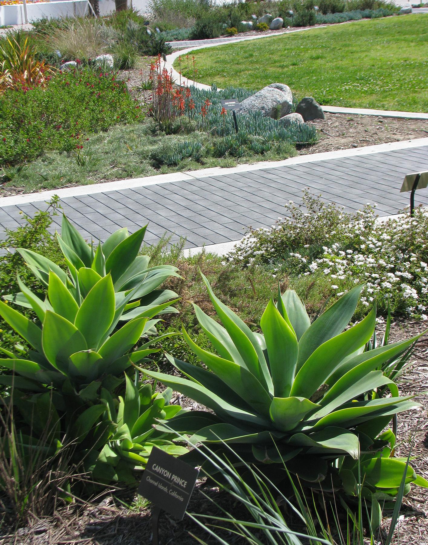 AOP-garden-plants.jpg