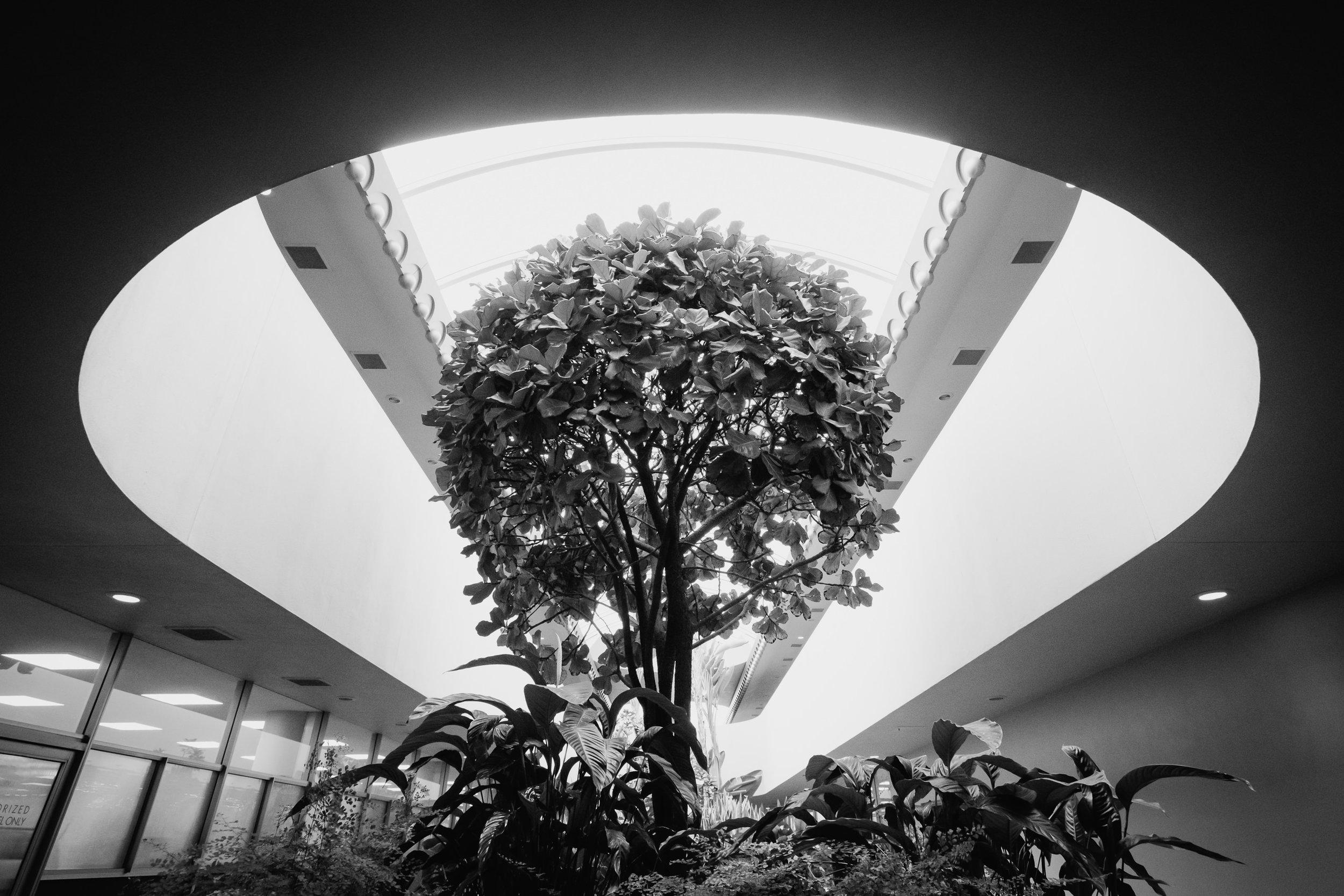 20190227 Marin Civic Centre - K M Dale Tan - 2204.jpg
