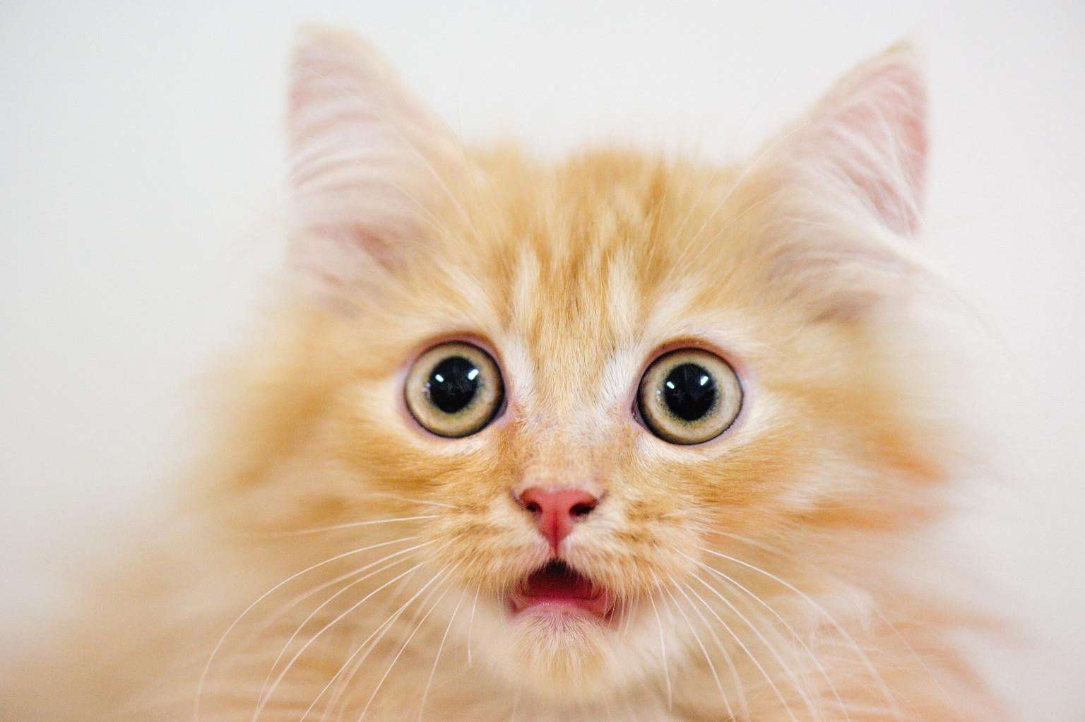 Surprised Cat.jpg