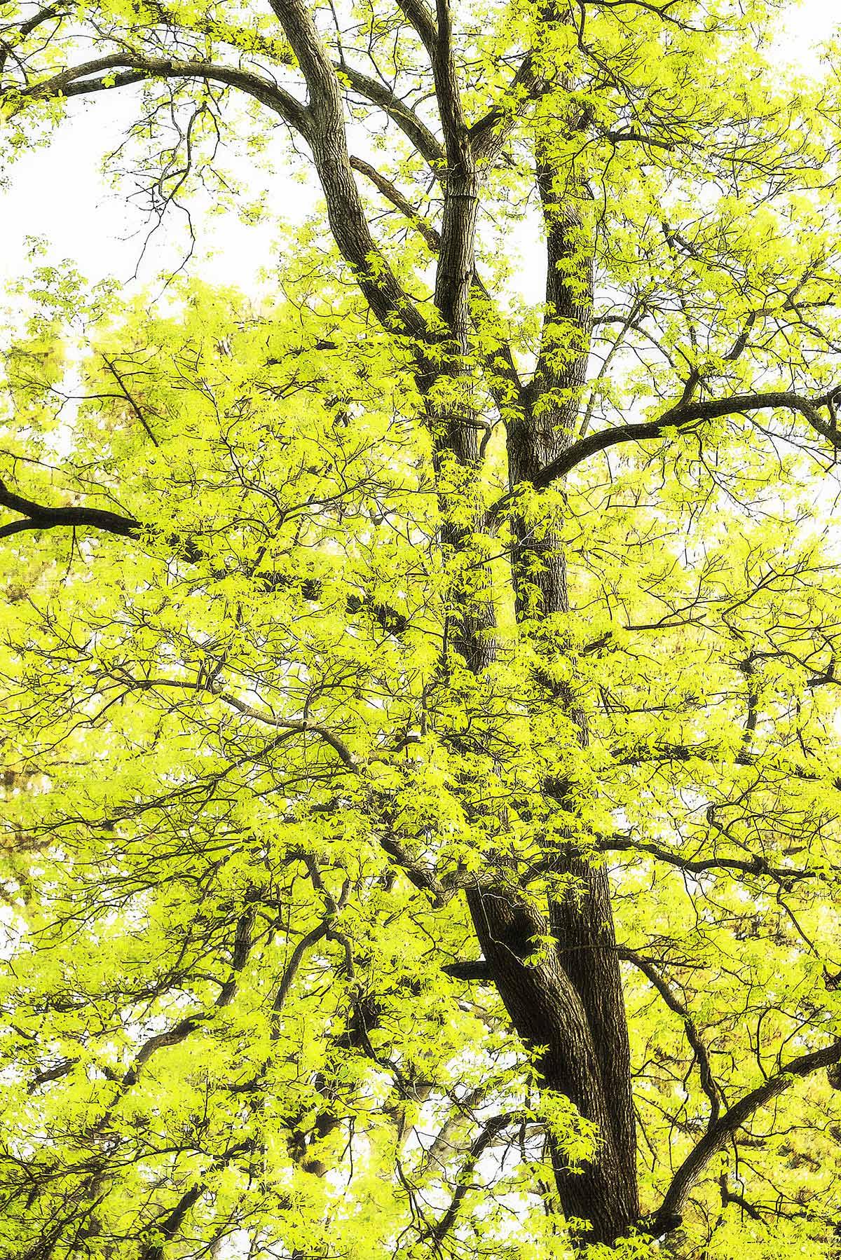 Trees #2013