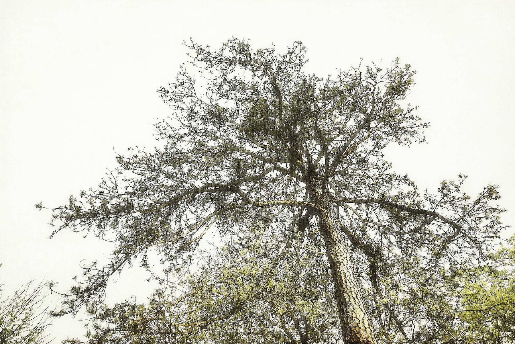 Trees #2055