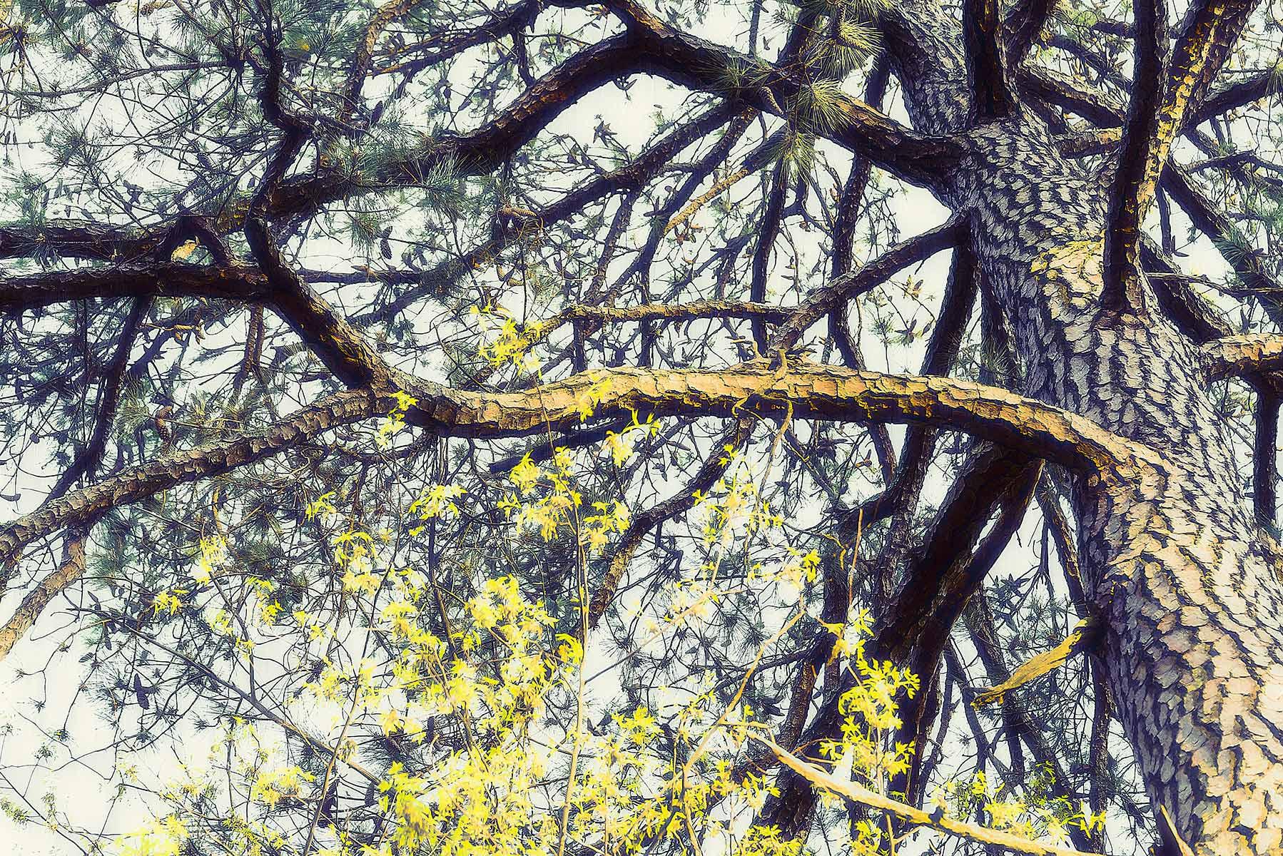Trees #2056
