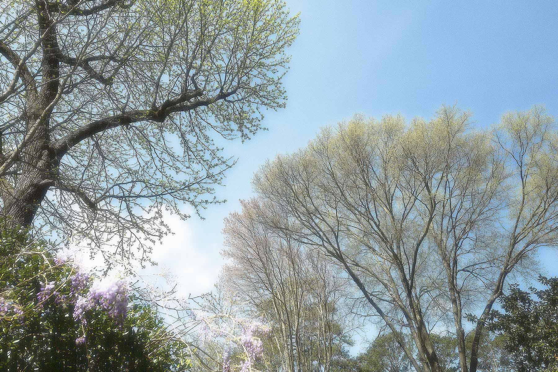 Trees #L0258