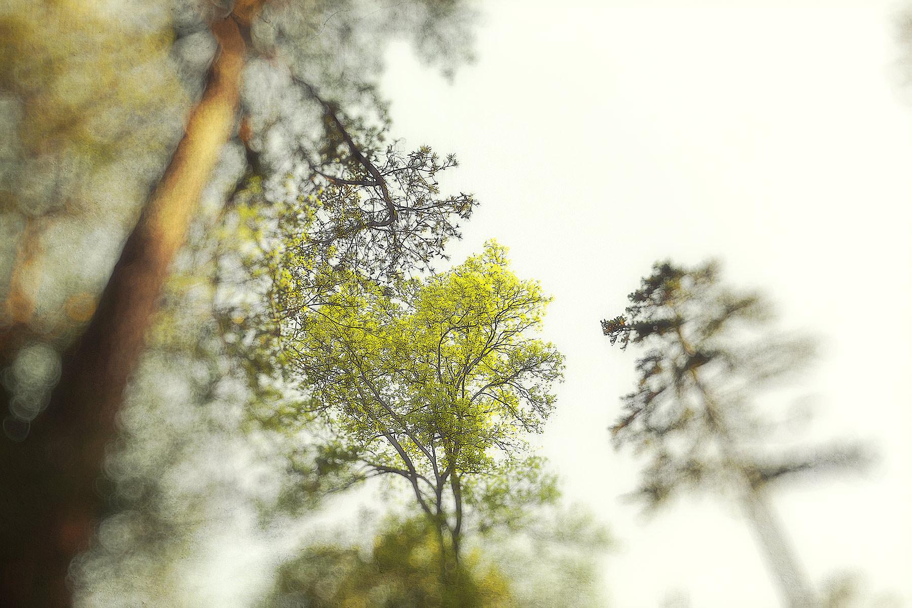 Trees #2061