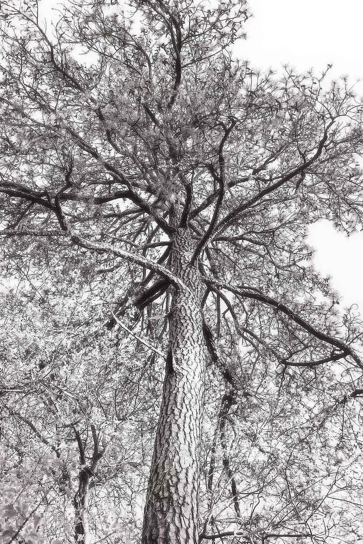 Trees #2063
