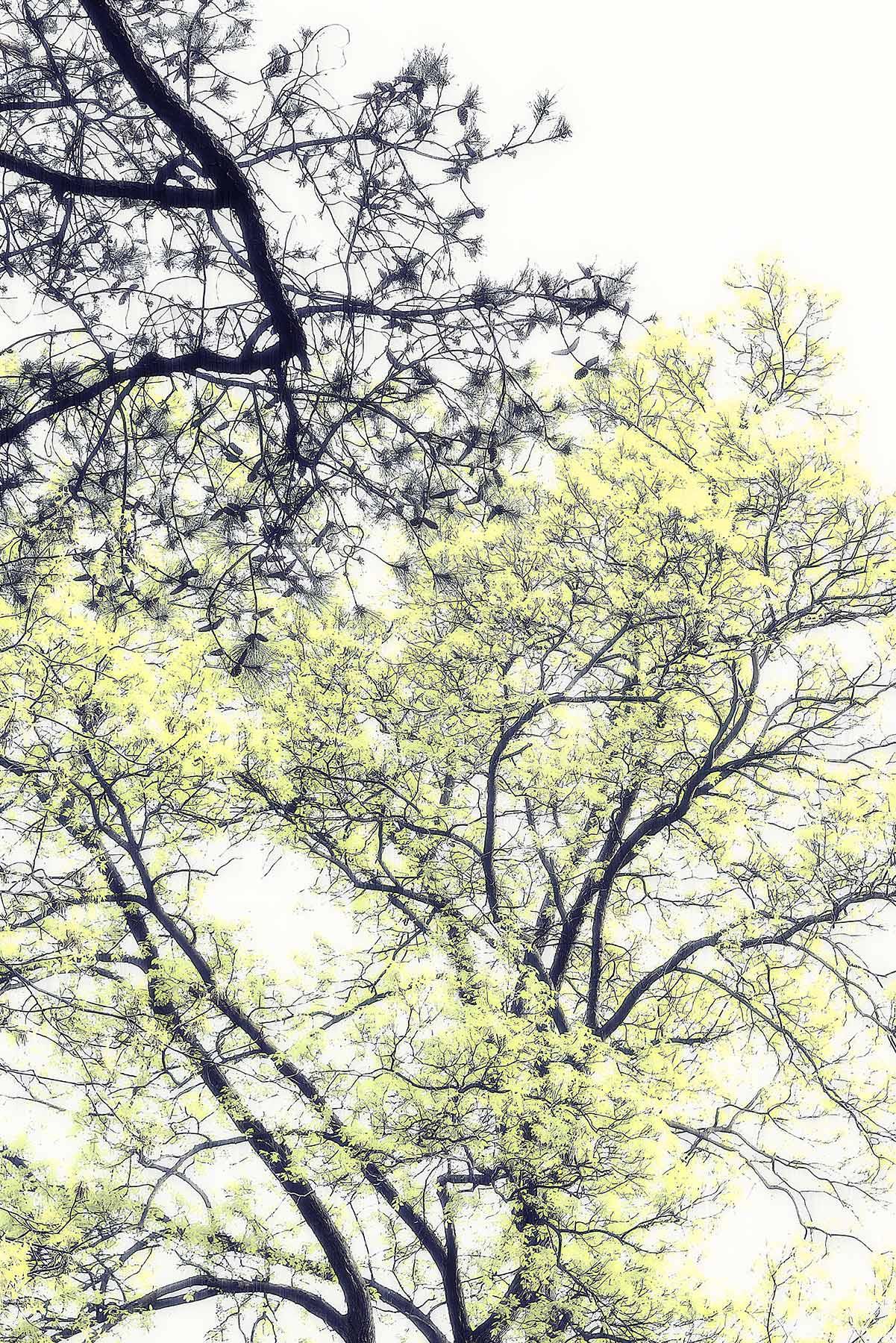 Trees #2014