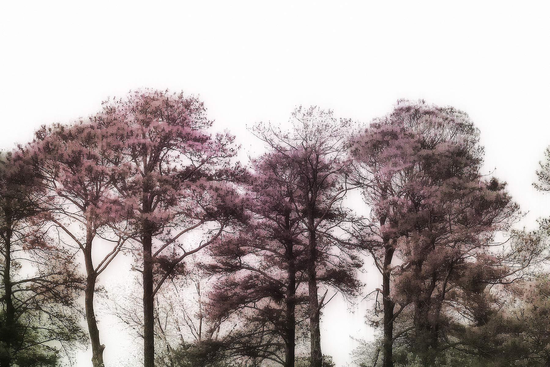 Trees #2039