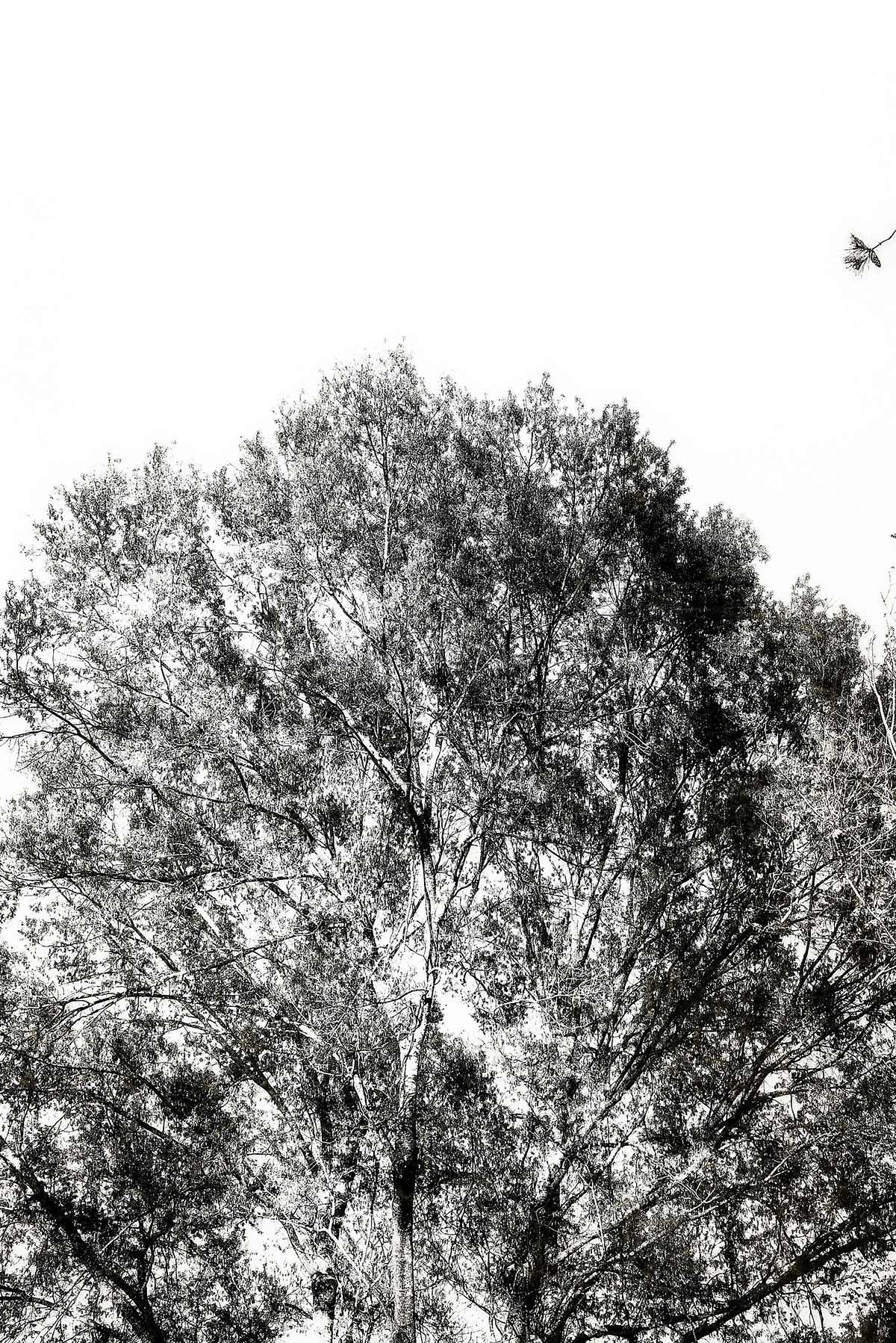Trees #2066