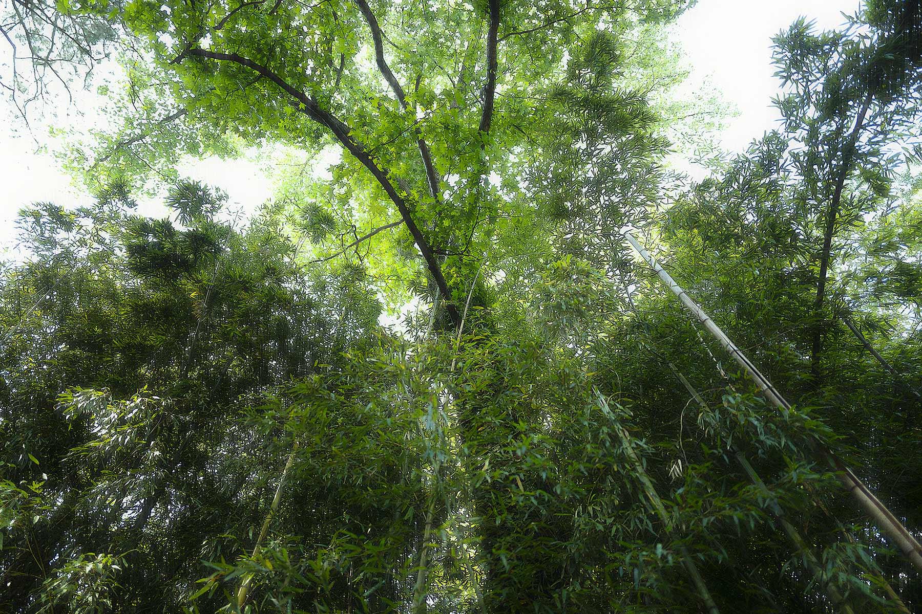 Trees #L0428