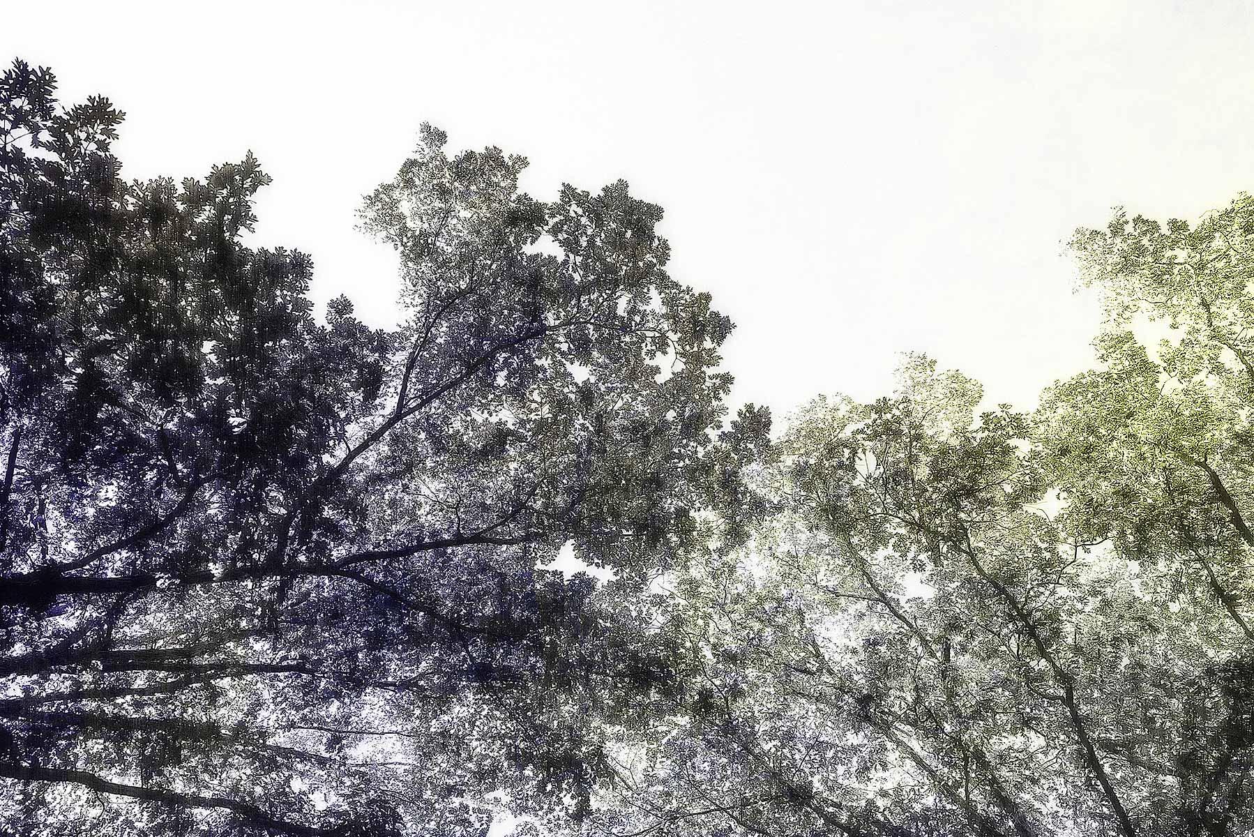 Trees #L2205