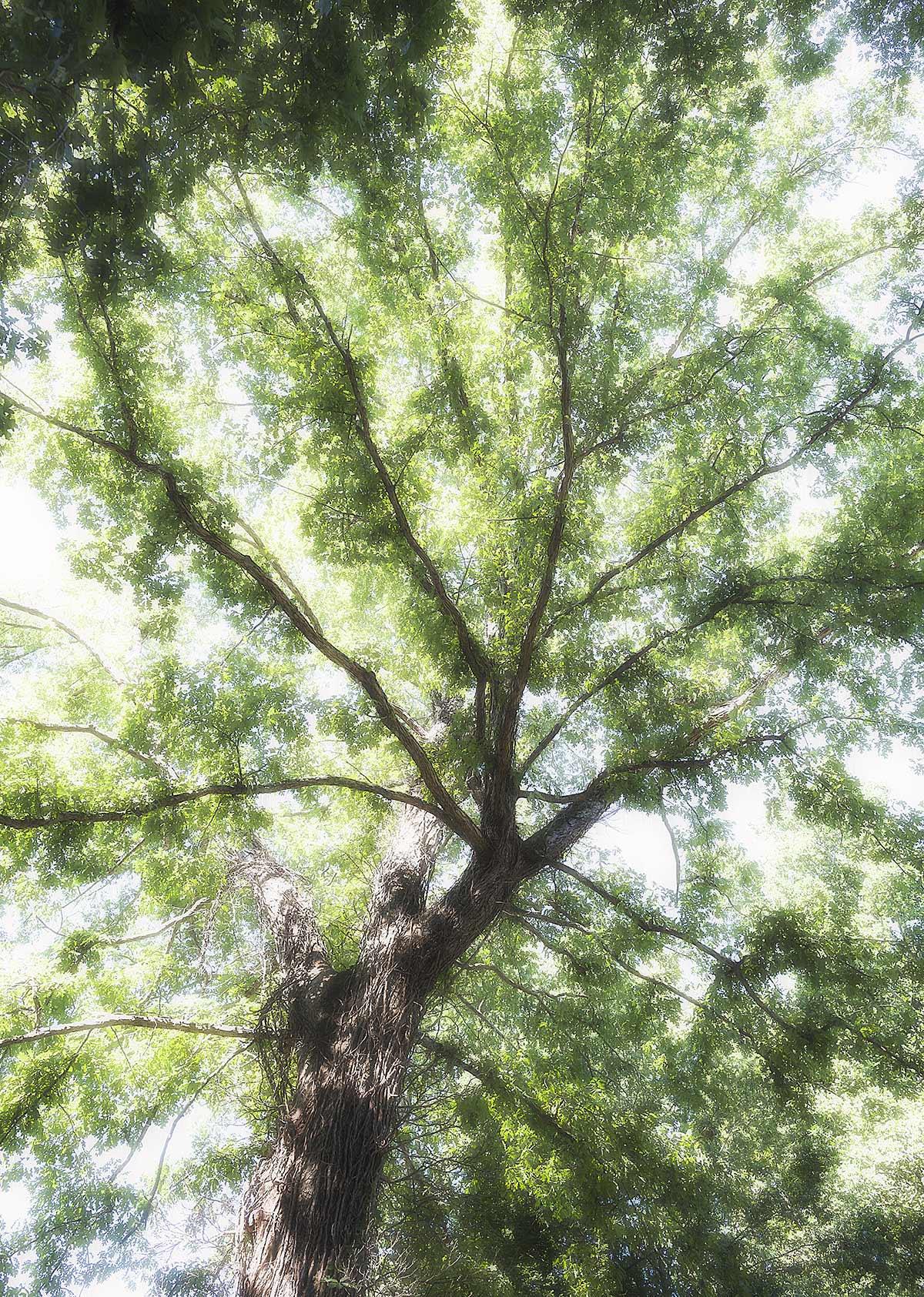 Trees #2210
