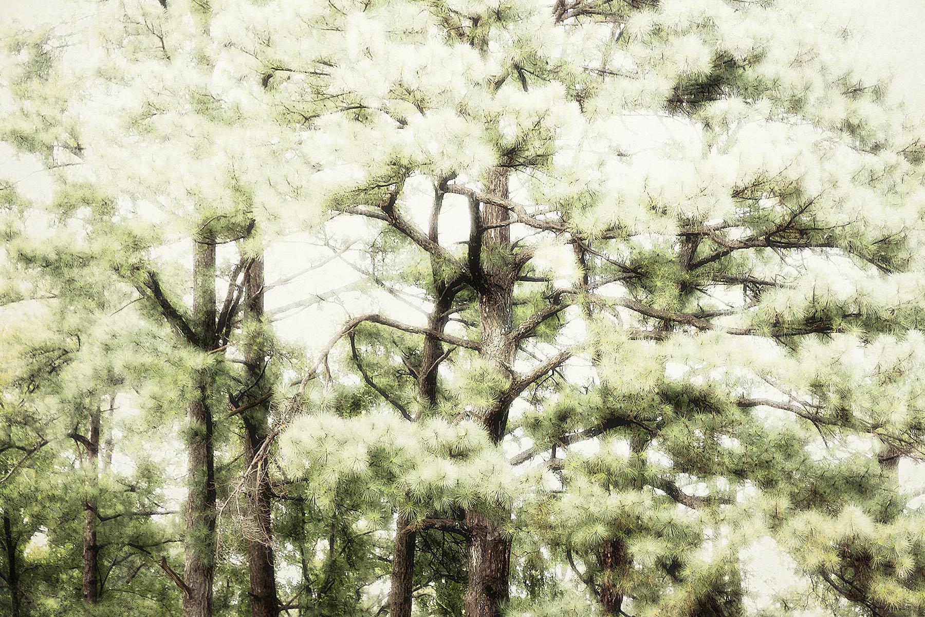 Trees #NAT2487