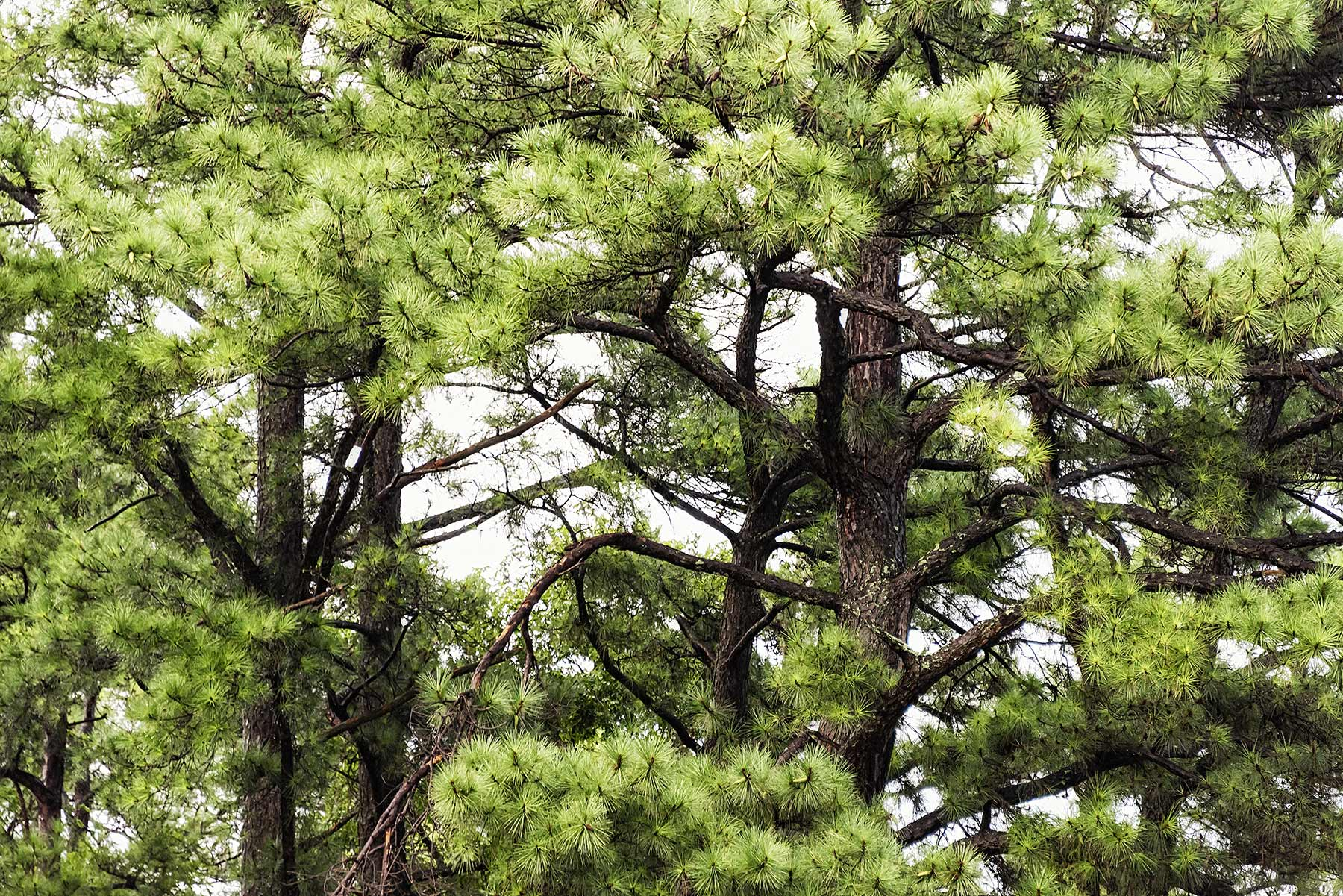 Trees #NAT2486