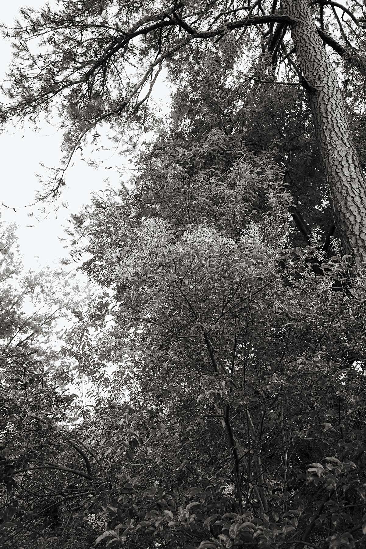Trees #NAT2441