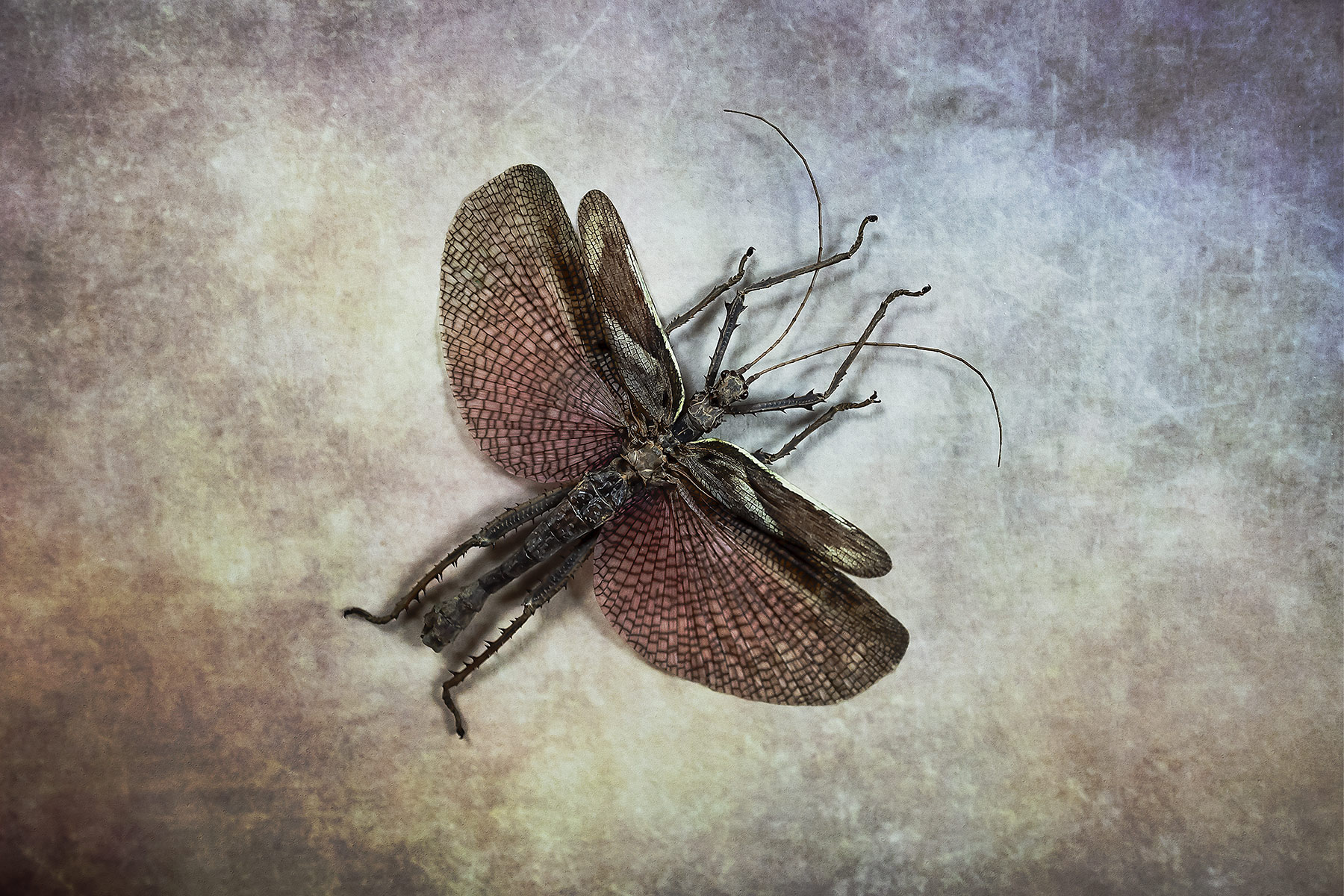 Bugs #L0052