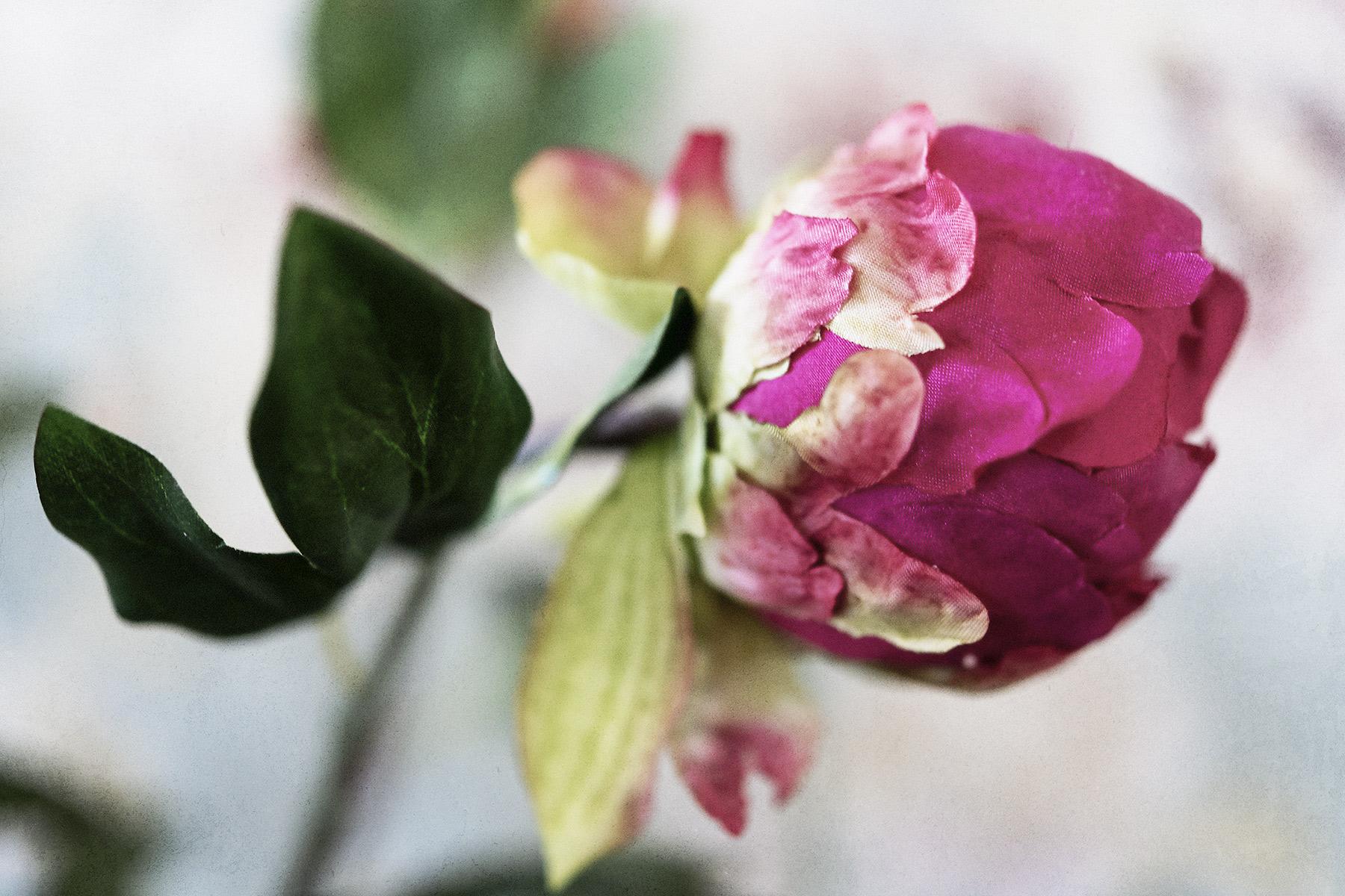 Botanical #D0615