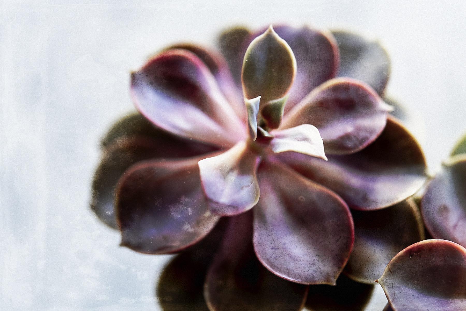 Botanical #D0752