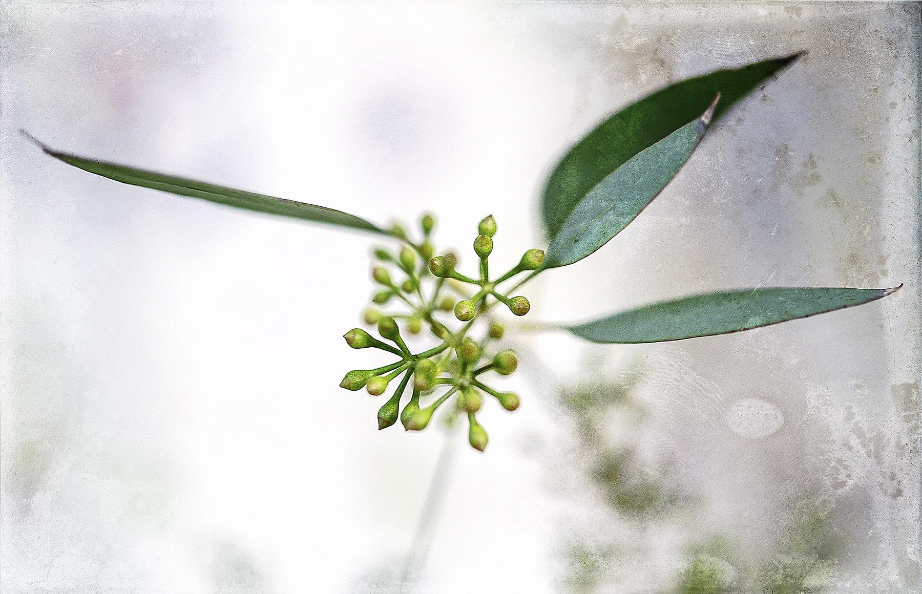 Botanical #D830
