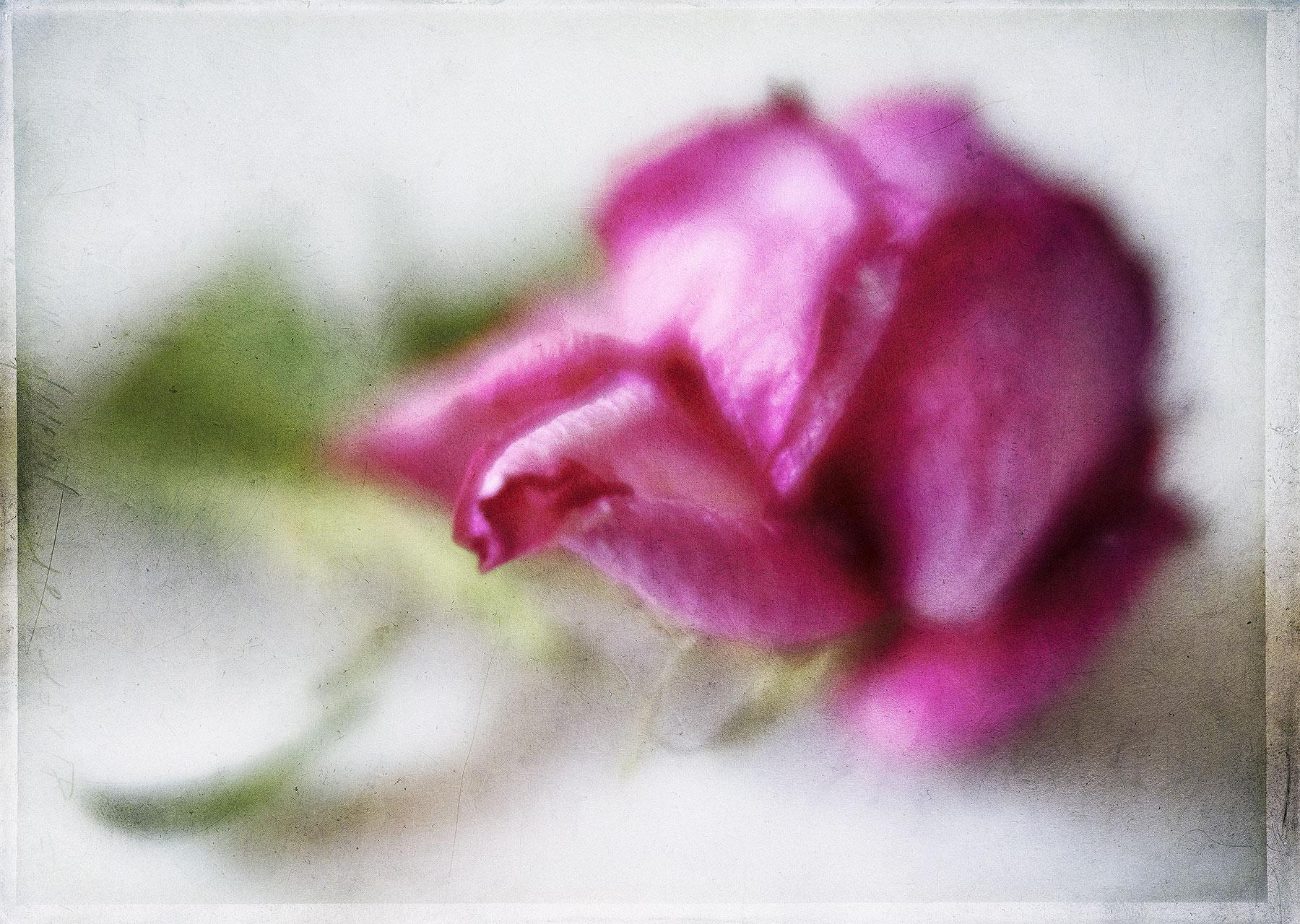 Botanical #LBY0848